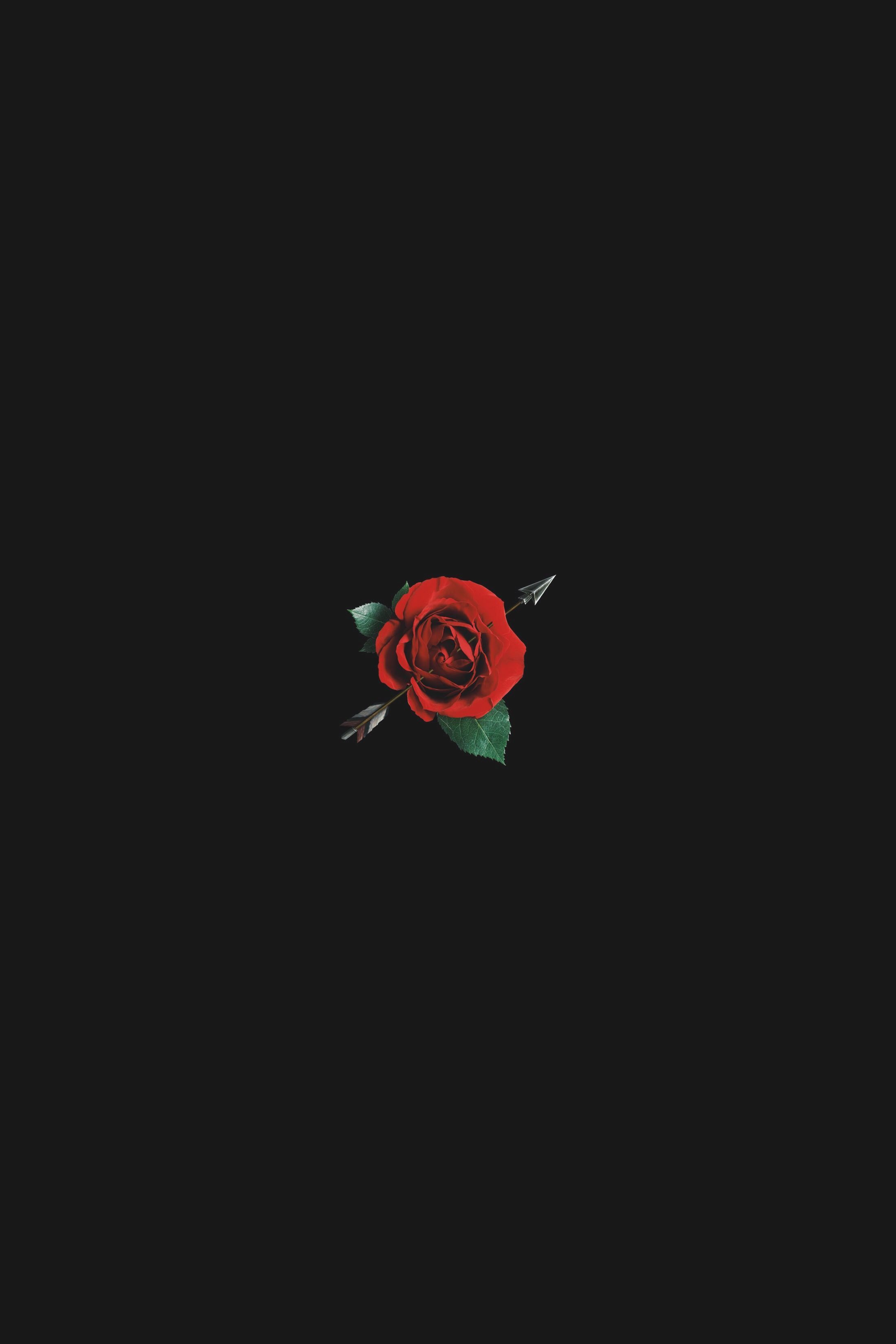 Black Rose Aesthetic Wallpapers Top Free Black Rose Aesthetic Backgrounds Wallpaperaccess