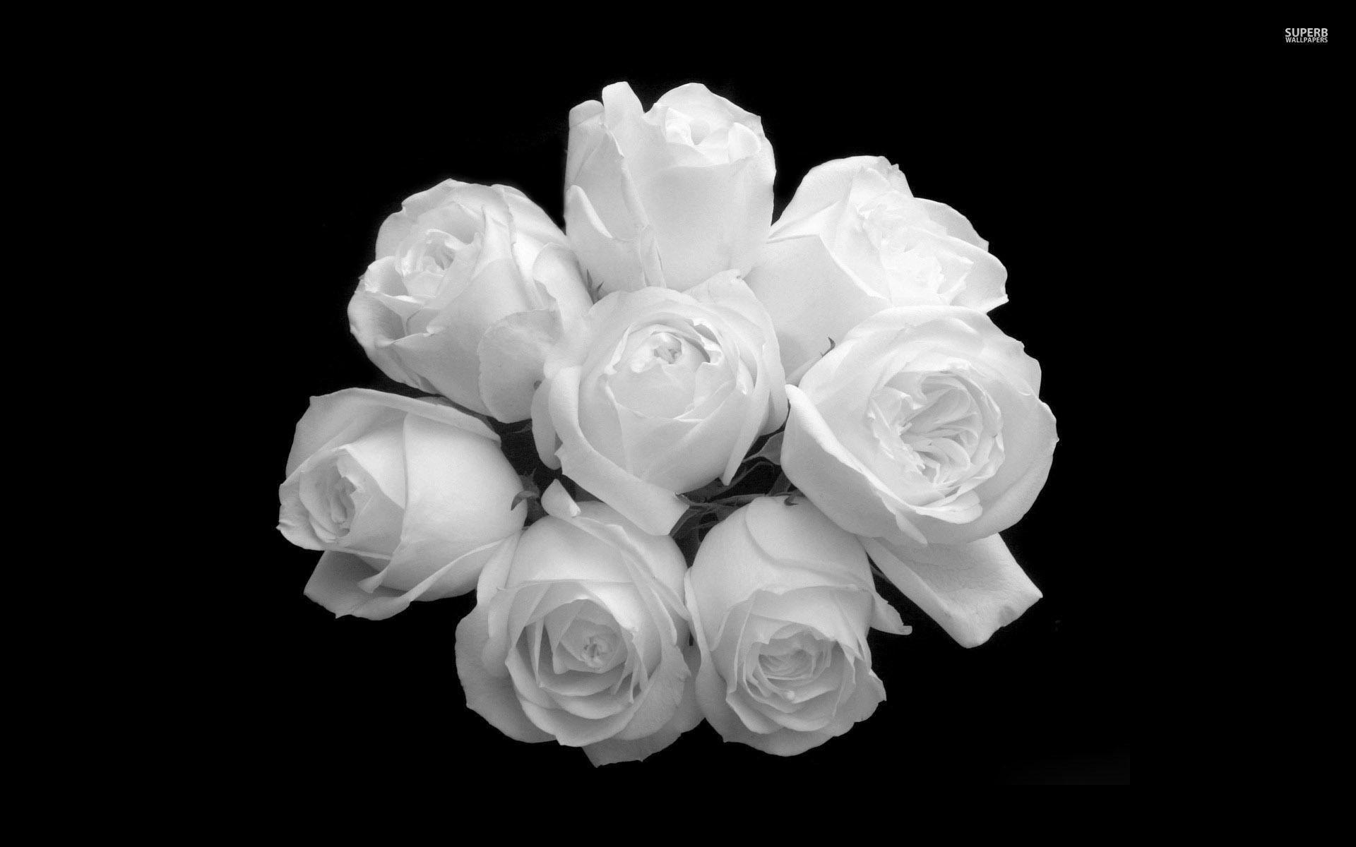 Rose Aesthetic Wallpaper White Novocom Top