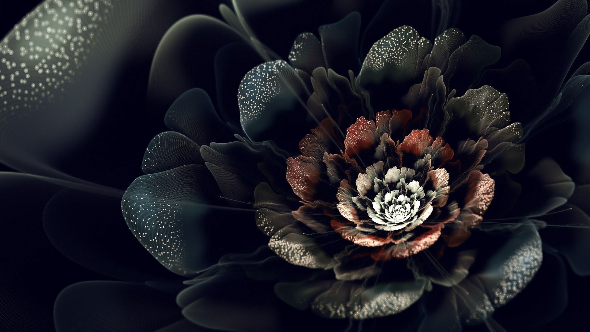 Black Flowers Hd Wallpapers Top Free Black Flowers Hd