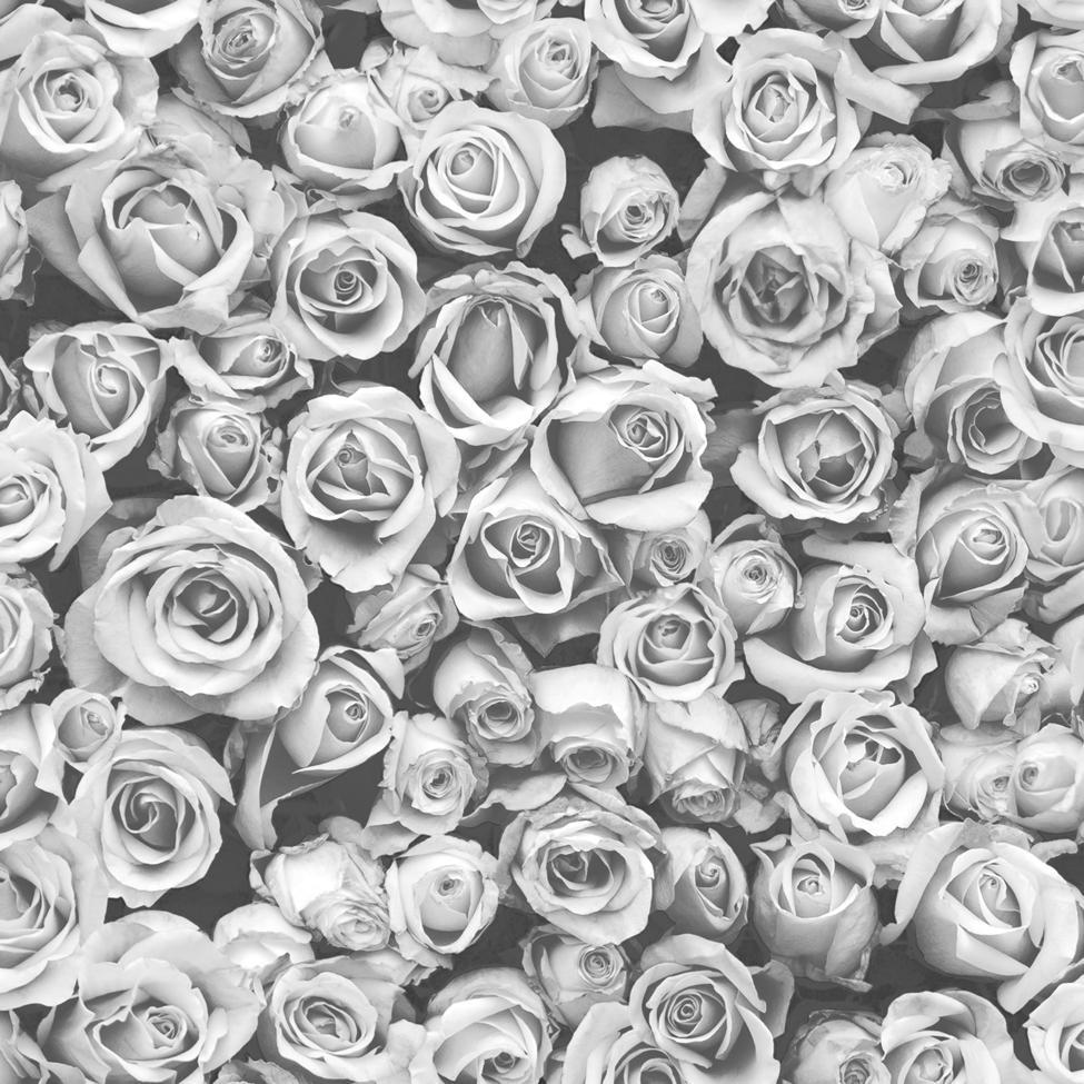 Black And White Rose Wallpapers Top Free Black And White