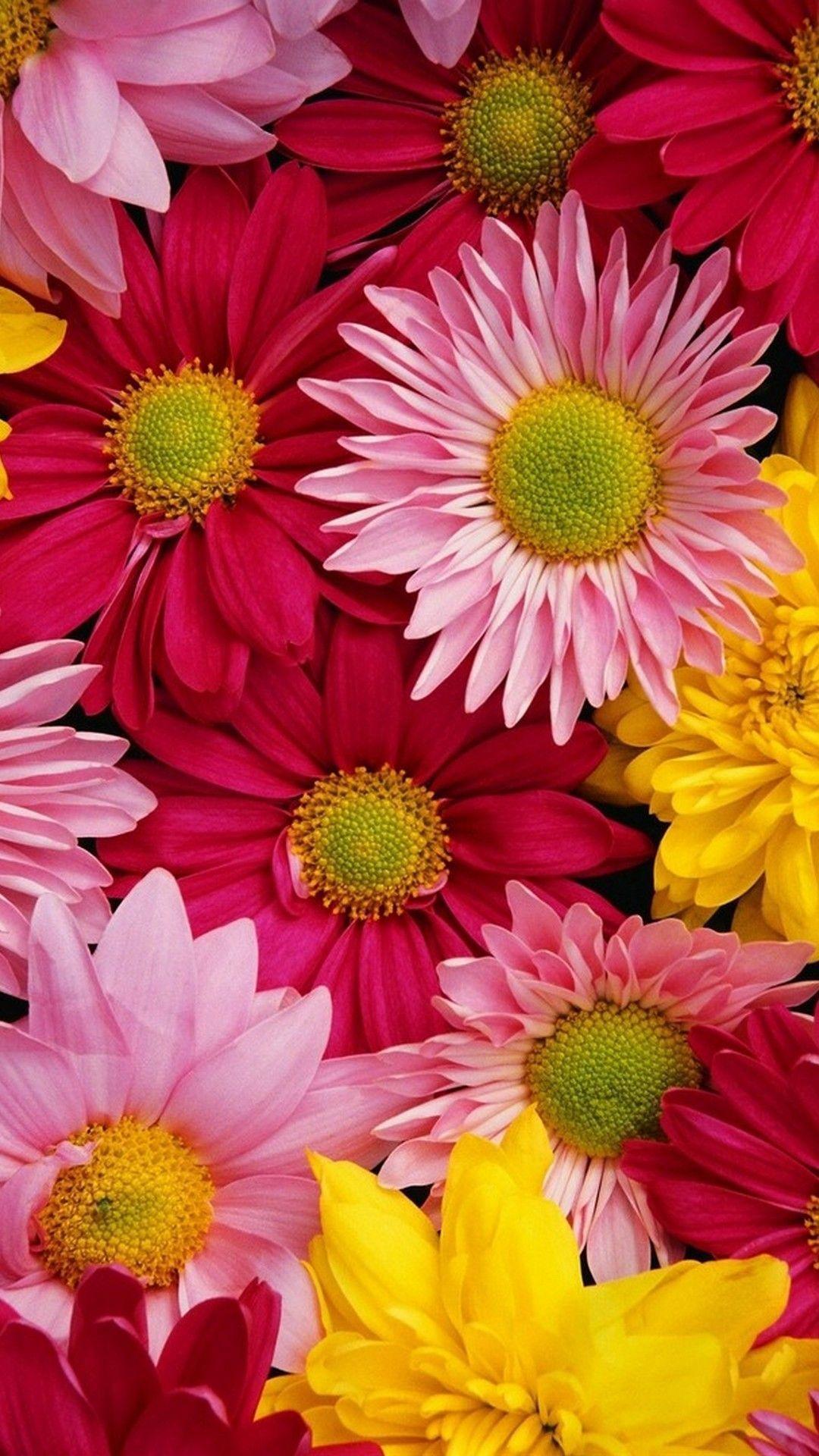 Cute Flower Iphone Wallpapers Top Free Cute Flower Iphone