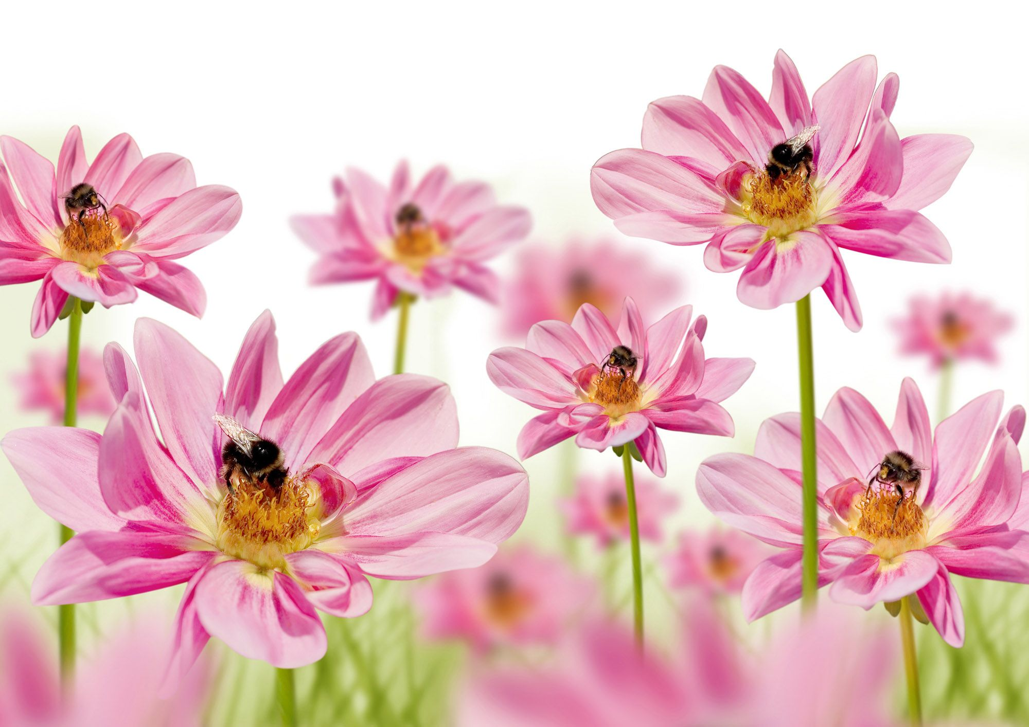 High Resolution Flower Wallpapers Top Free High Resolution