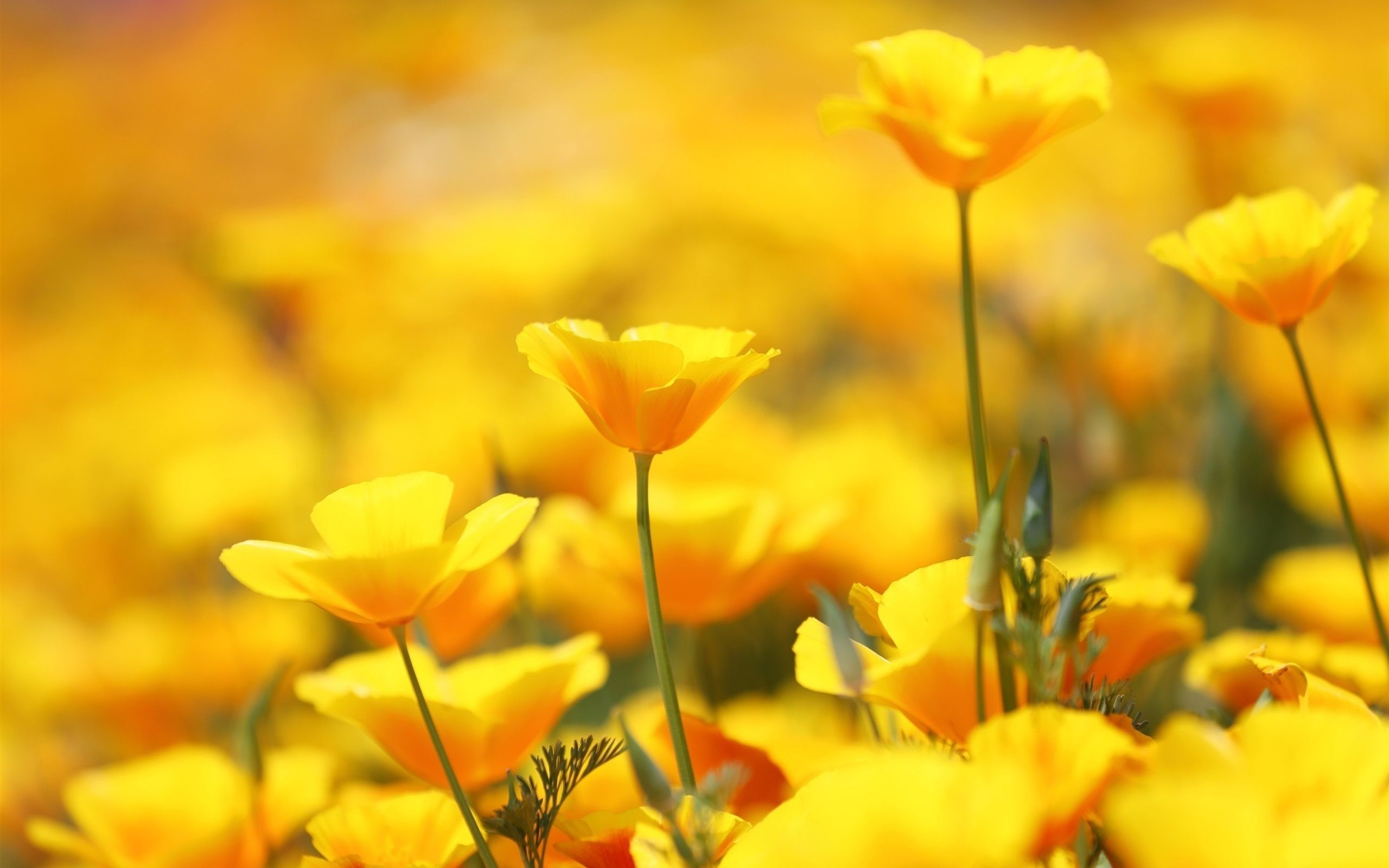 yellow flowers hd wallpapers top free yellow flowers hd backgrounds wallpaperaccess yellow flowers hd wallpapers top free