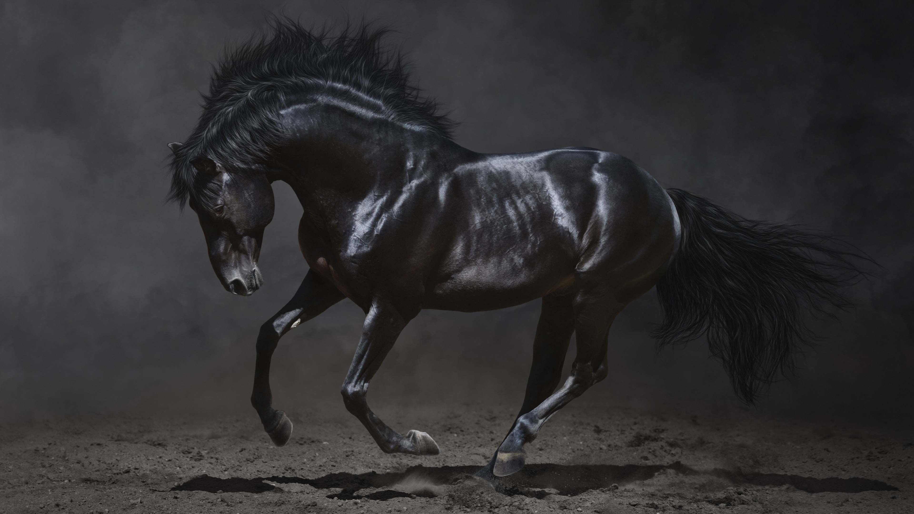 Black Horse Wallpapers Top Free Black Horse Backgrounds