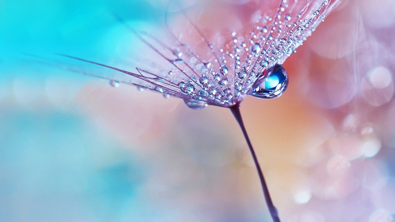 Water Flower Wallpapers Top Free Water Flower Backgrounds Wallpaperaccess