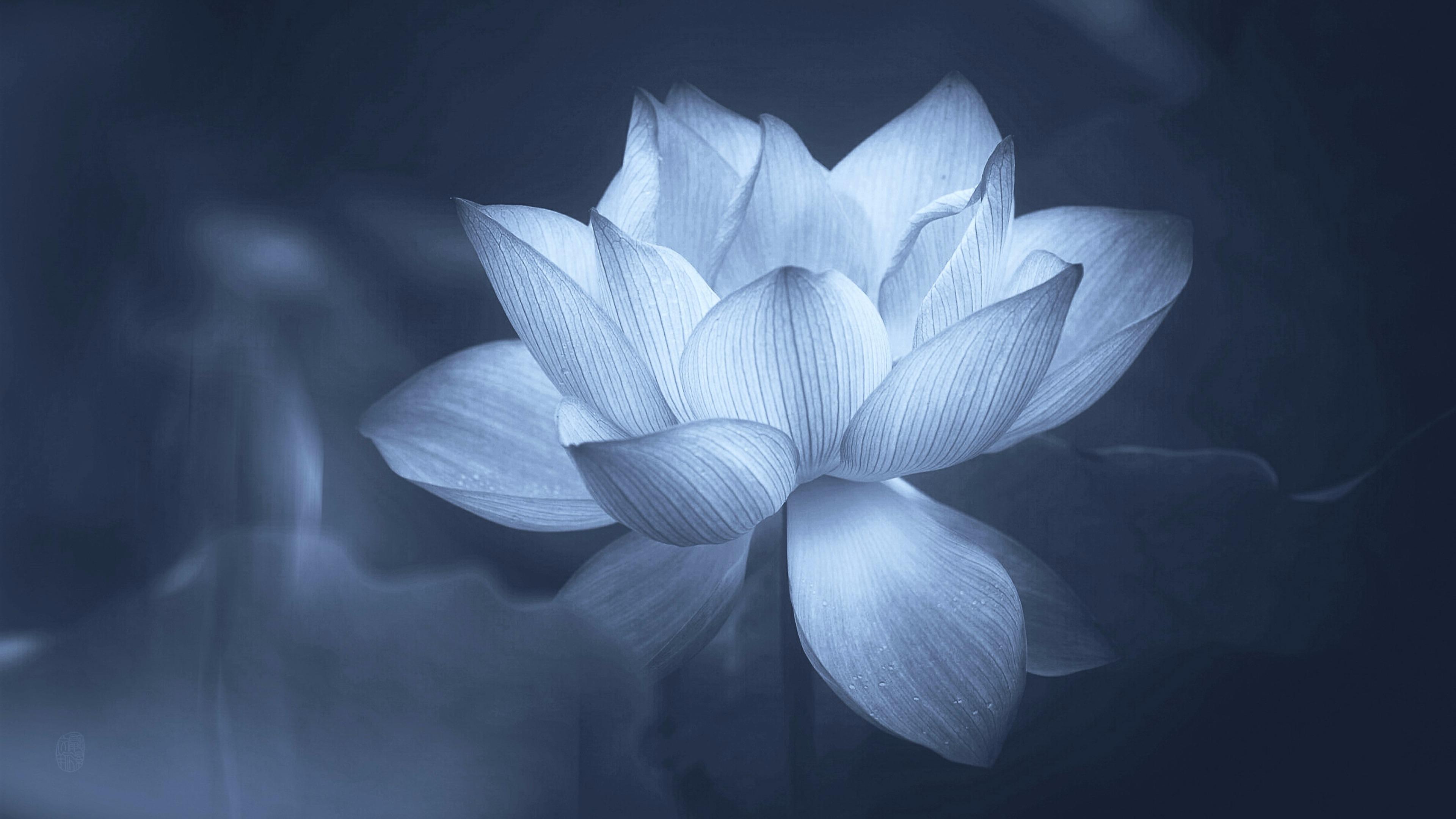 Black And White Lotus Desktop Wallpapers Top Free Black And White Lotus Desktop Backgrounds Wallpaperaccess