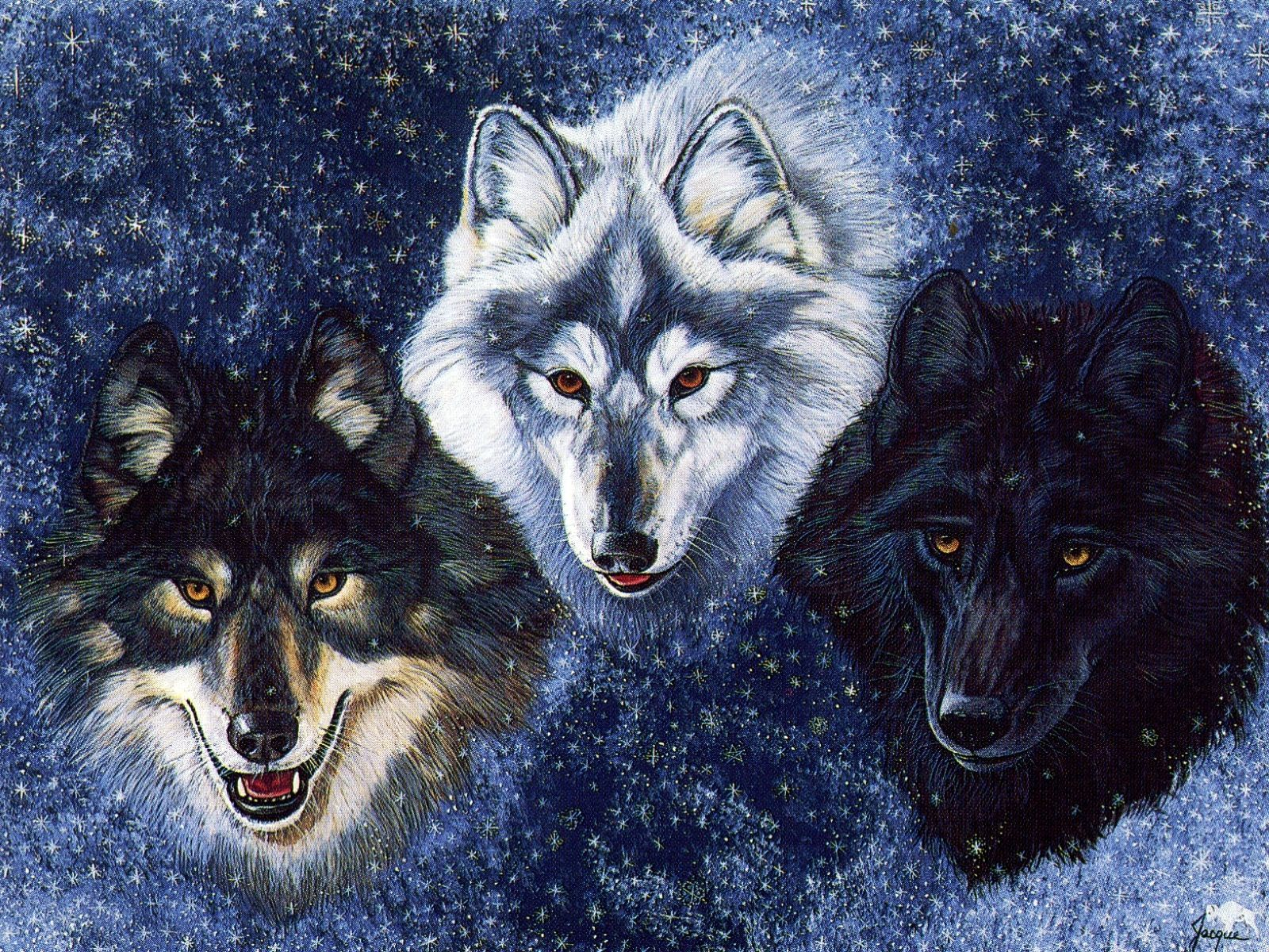 Native American Wolf Wallpapers Top Free Native American