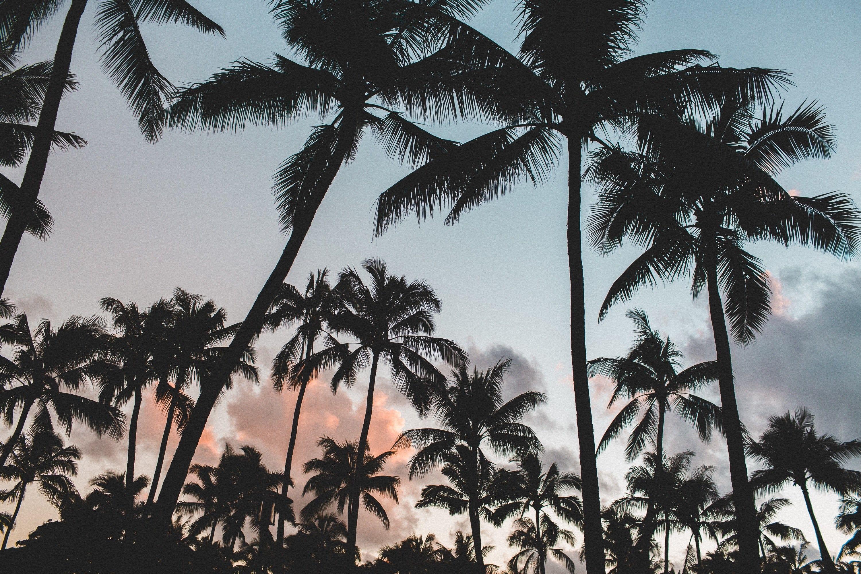 Palm Tree Desktop Wallpapers - Top Free