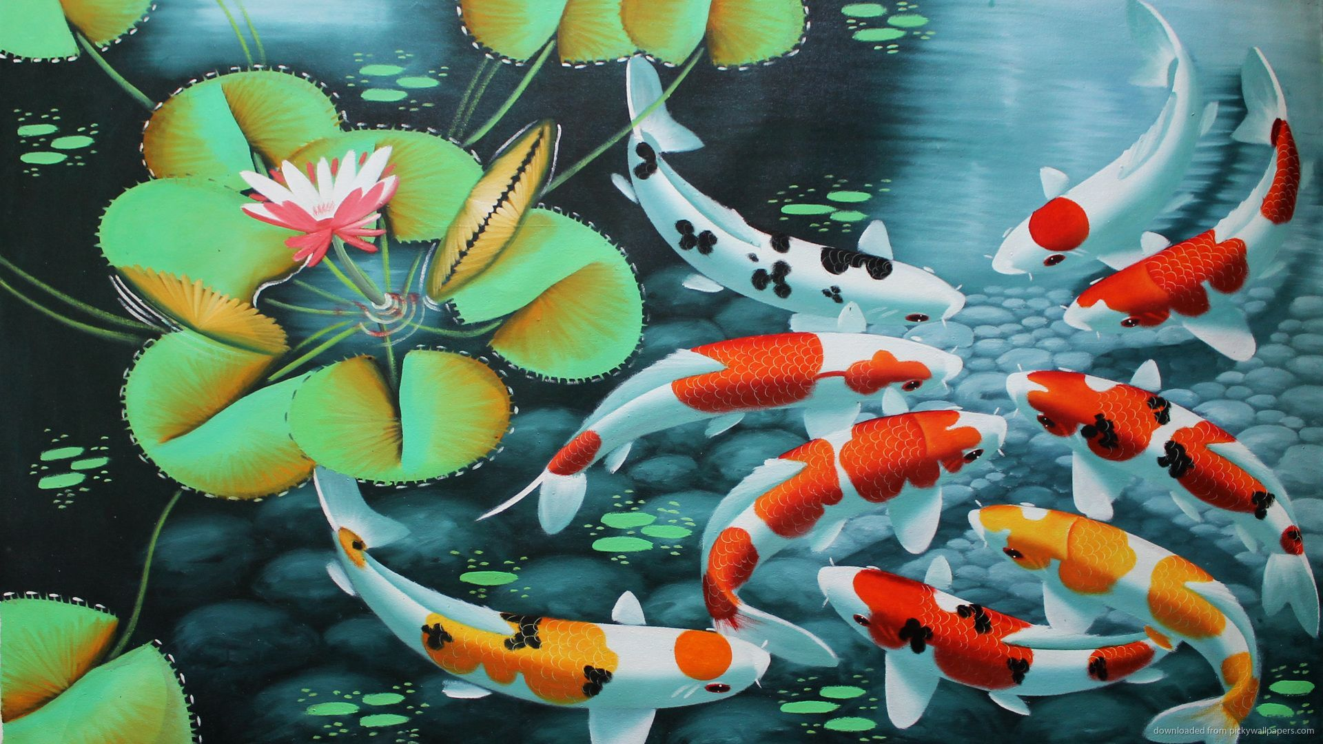 Koi Wallpapers Top Free Koi Backgrounds Wallpaperaccess
