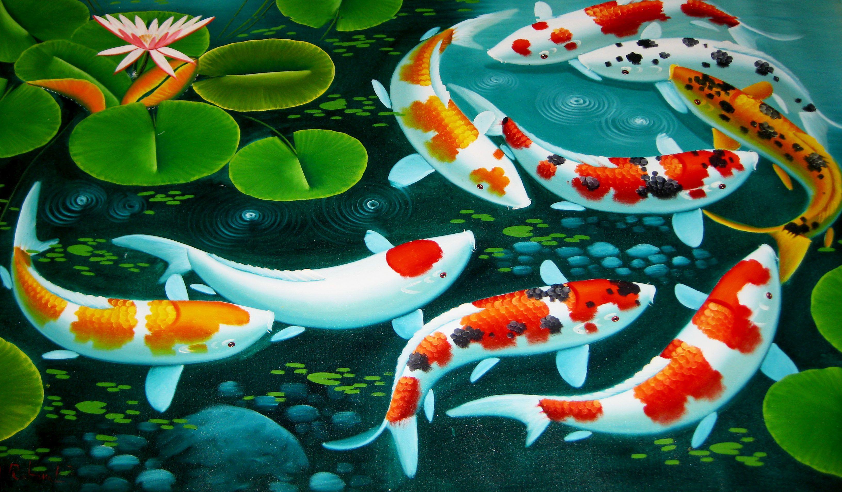 Koi Wallpapers Top Free Koi Backgrounds Wallpaperaccess