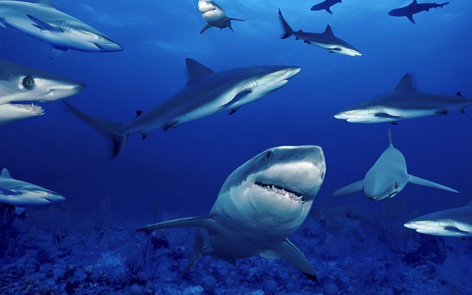 Cartoon Shark Wallpapers Top Free Cartoon Shark