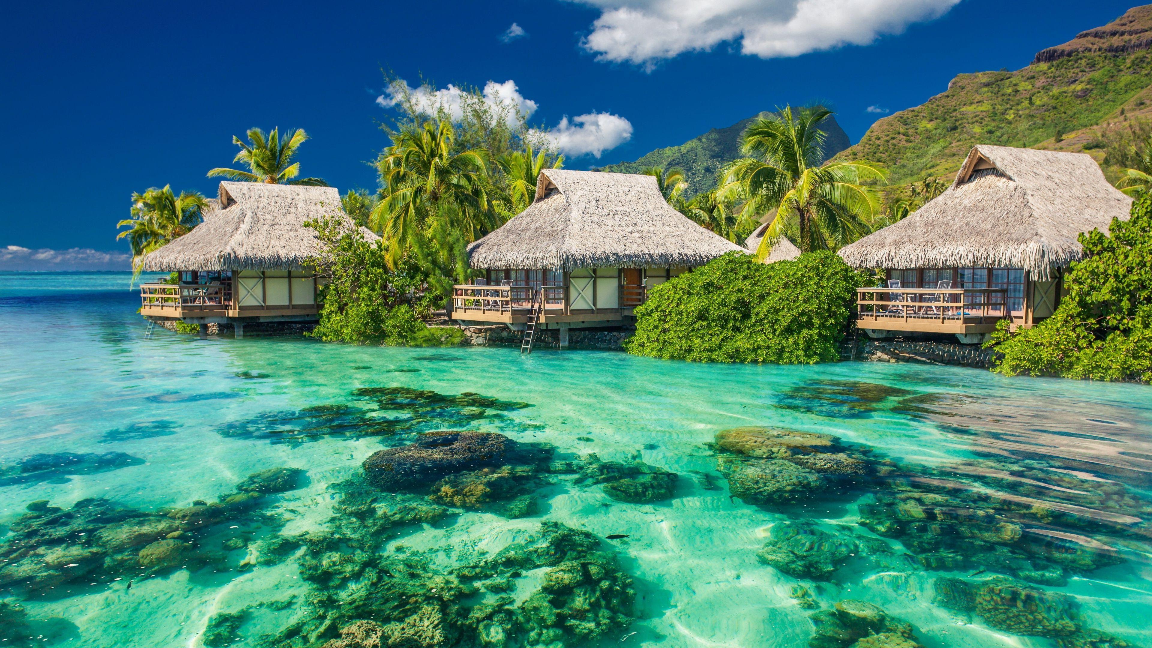 Tropical Paradise Beach 4k Hd Desktop Wallpaper For 4k: 4K Ultra HD Beach Wallpapers