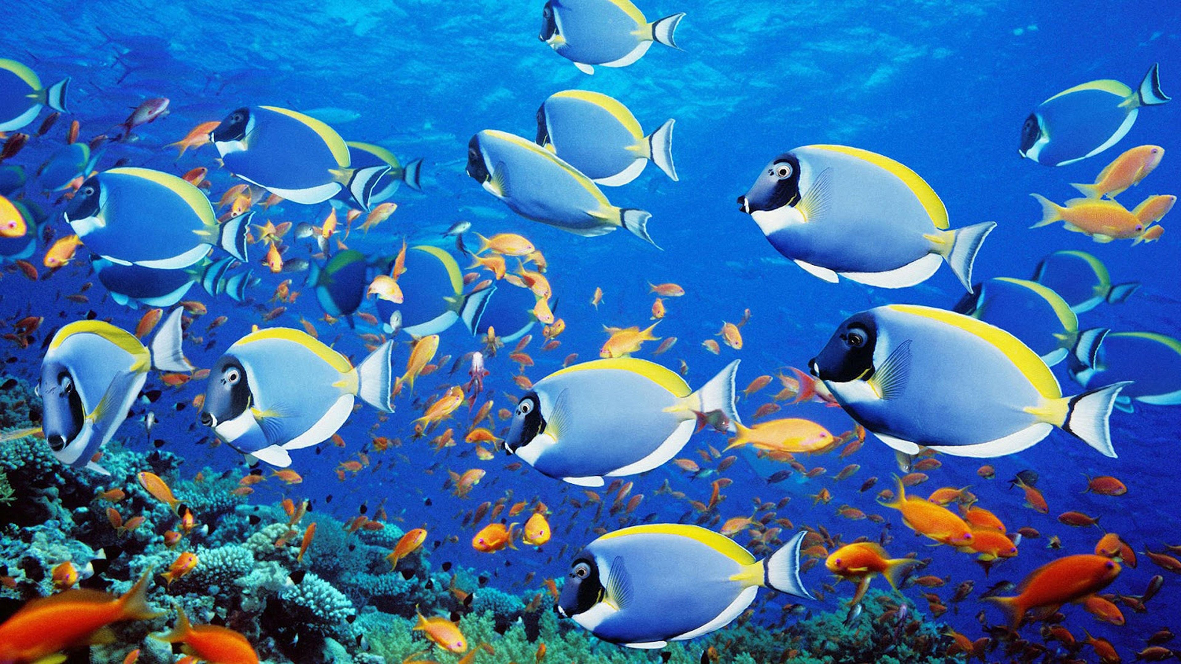Fish 3840x2160 Wallpapers Top Free Fish 3840x2160 Backgrounds Wallpaperaccess