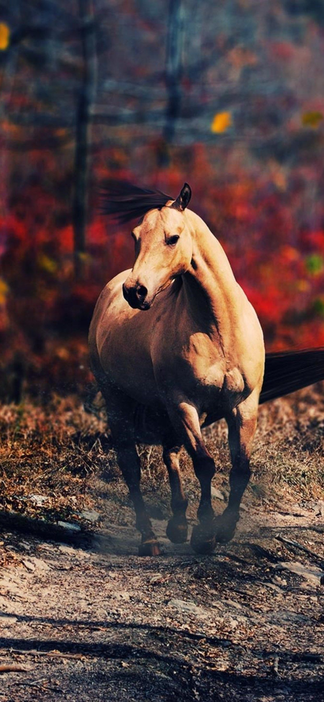 Horse Iphone Wallpapers Top Free Horse Iphone Backgrounds Wallpaperaccess