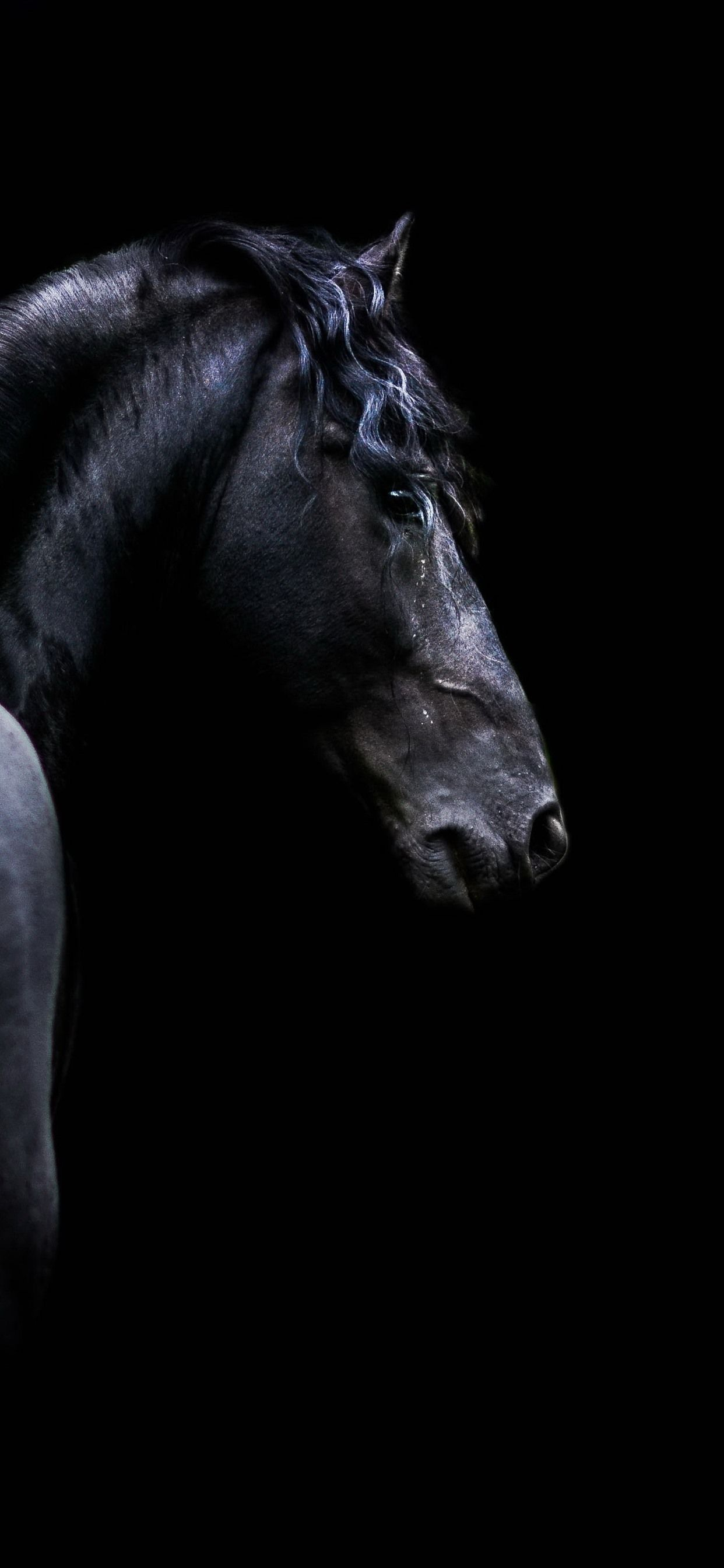 Horse Iphone Wallpapers Top Free Horse Iphone Backgrounds