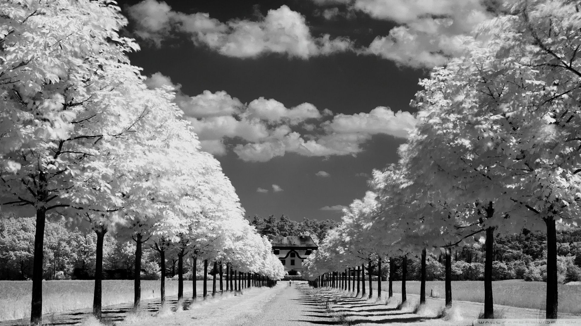Black And White Desktop Wallpapers Top Free Black And White