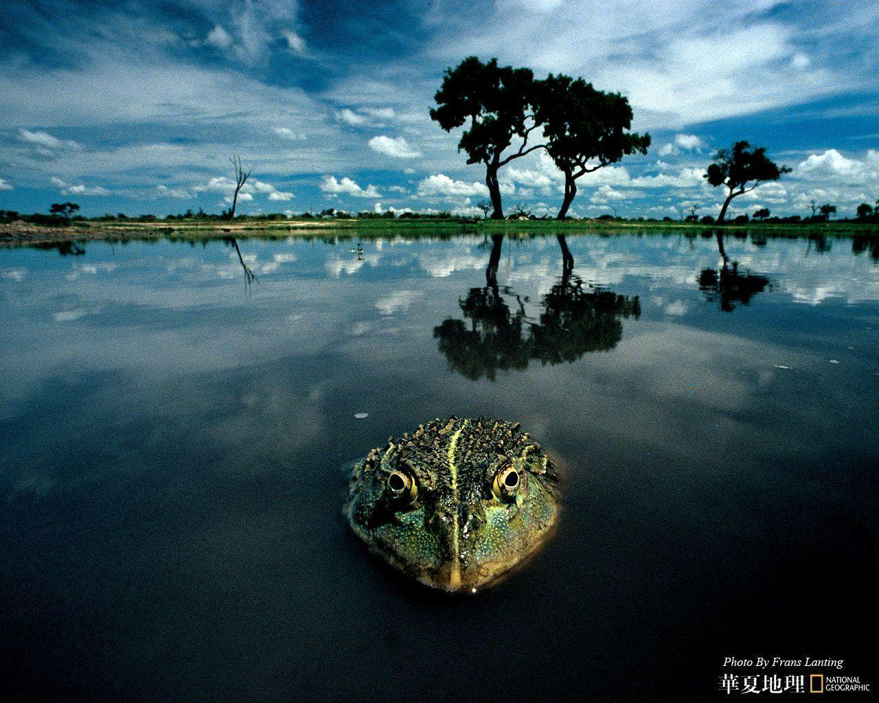 National Geographic Hd Wallpapers Top Free National Geographic Hd Backgrounds Wallpaperaccess