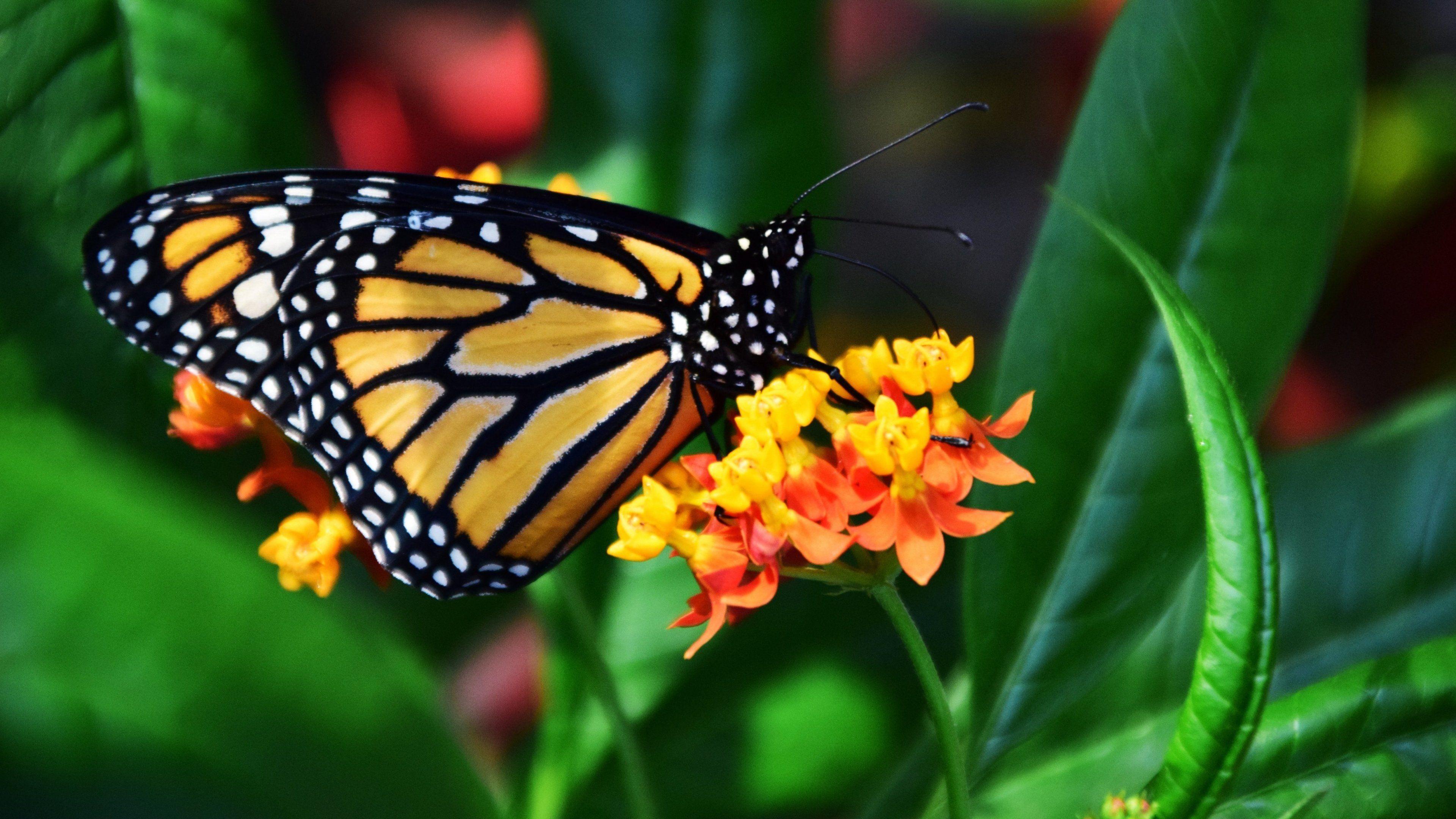 Butterfly Desktop Wallpapers - Top Free Butterfly Desktop ...