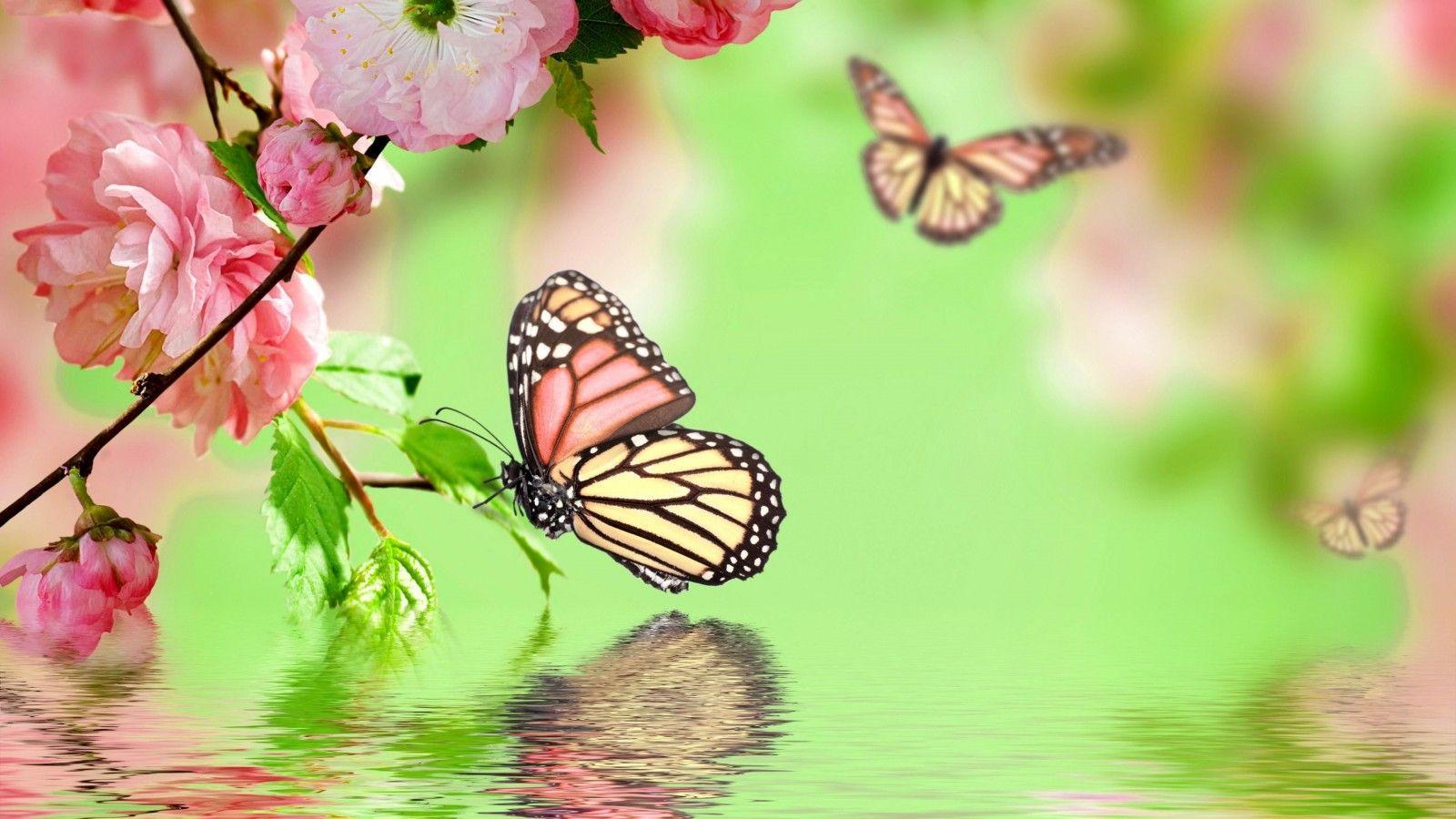 Butterfly Desktop Wallpapers Top Free Butterfly Desktop