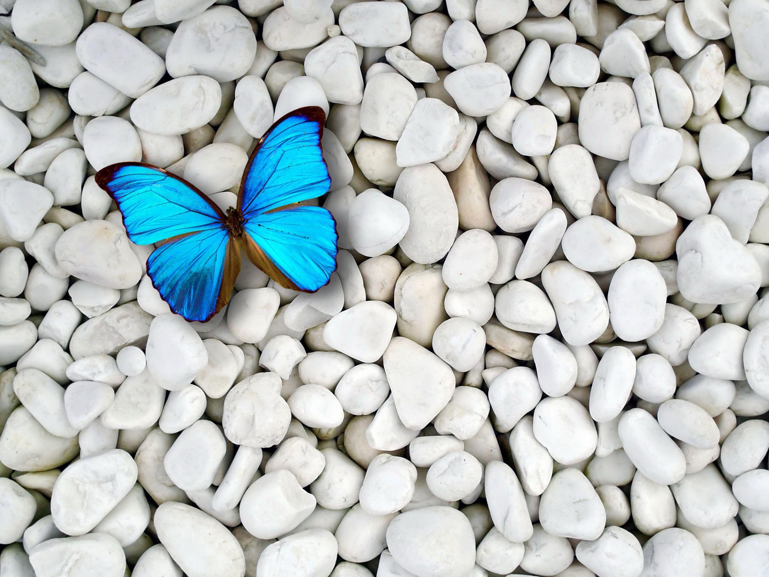 Butterfly Desktop Wallpapers Top Free Butterfly Desktop Backgrounds Wallpaperaccess