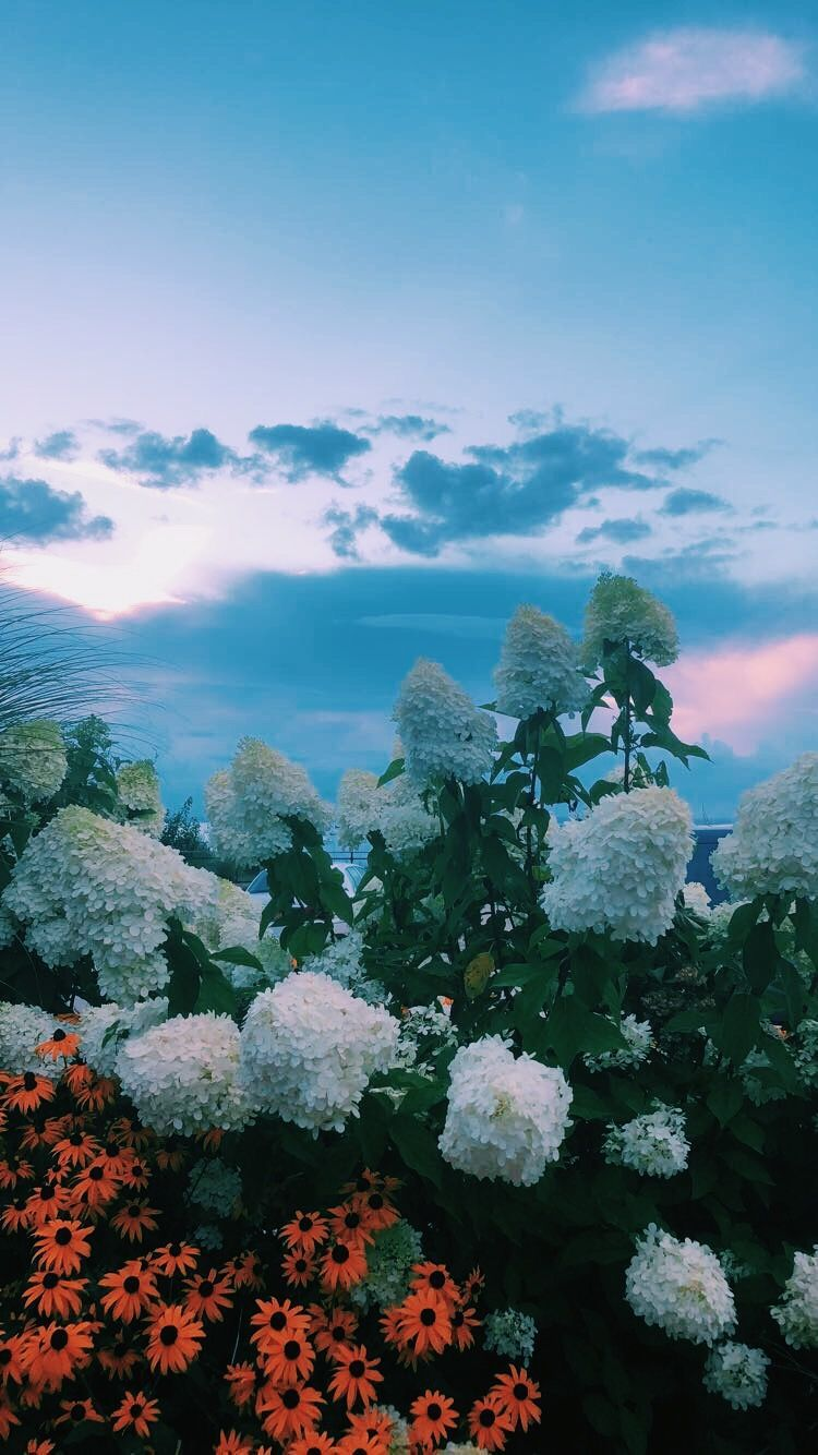 Aesthetic Landscape Wallpapers Top Free Aesthetic Landscape