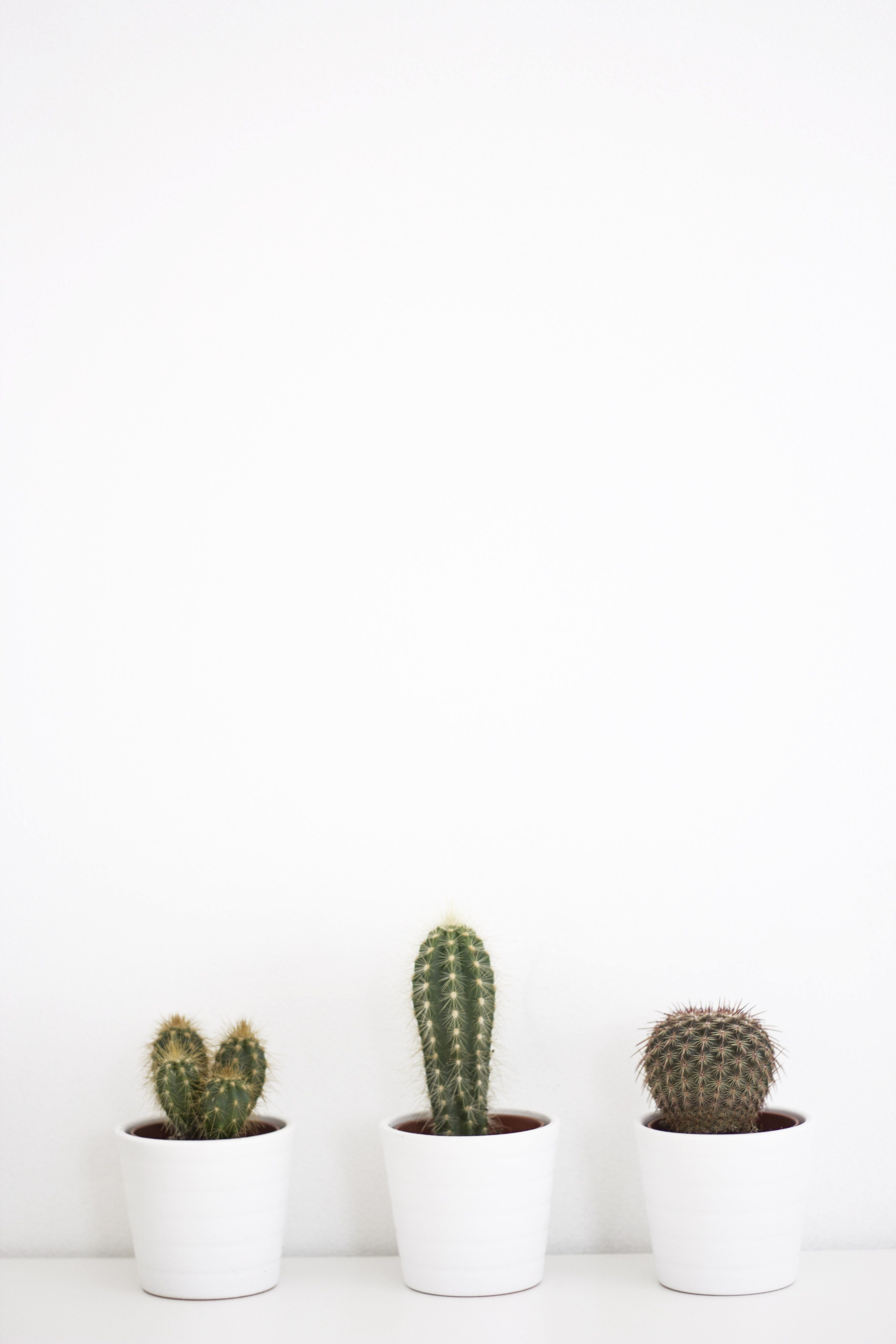 Minimalist Cactus Wallpapers Top Free Minimalist Cactus Backgrounds Wallpaperaccess