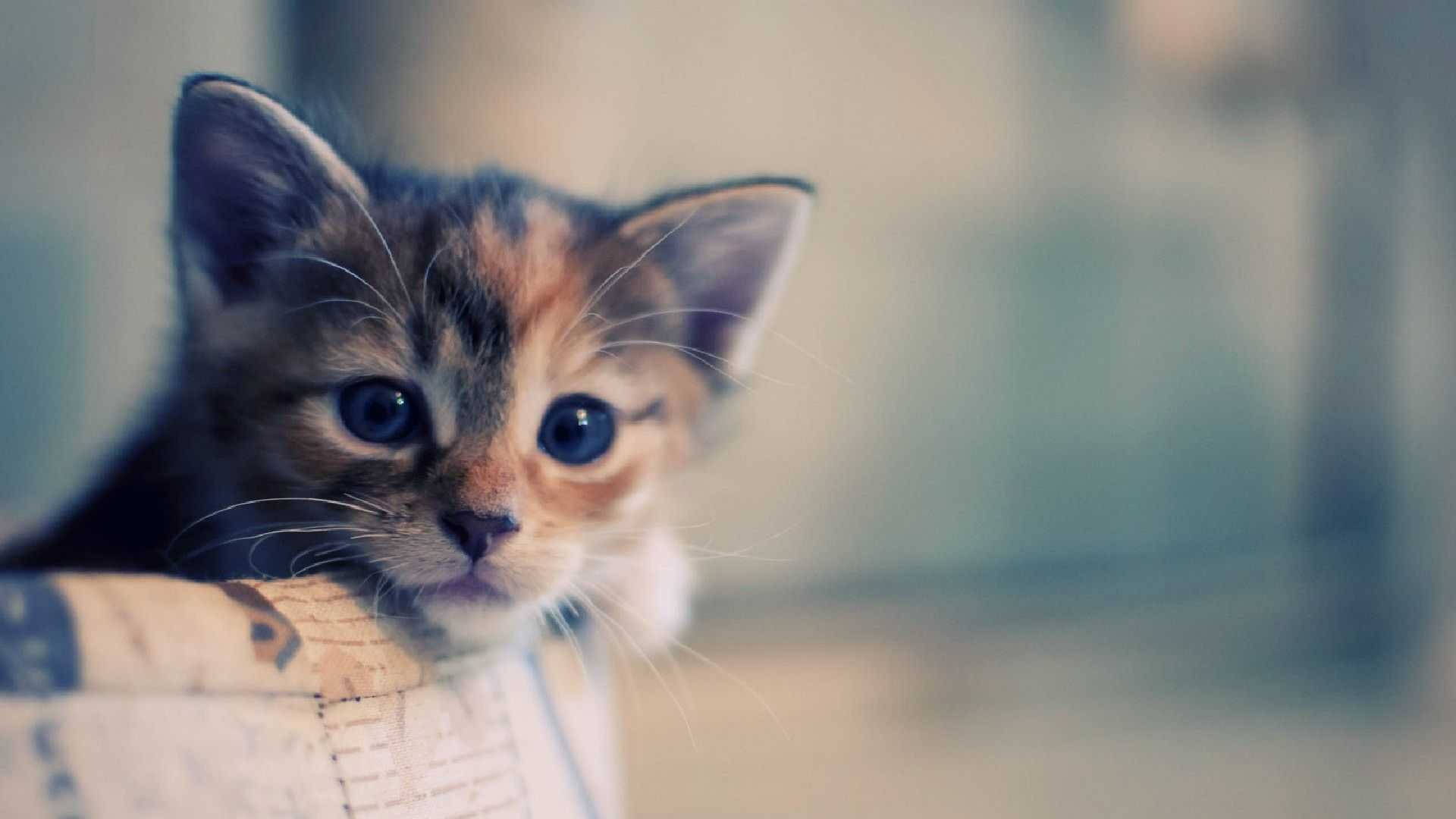 Cute Cat Hd Wallpapers Top Free Cute Cat Hd Backgrounds Wallpaperaccess