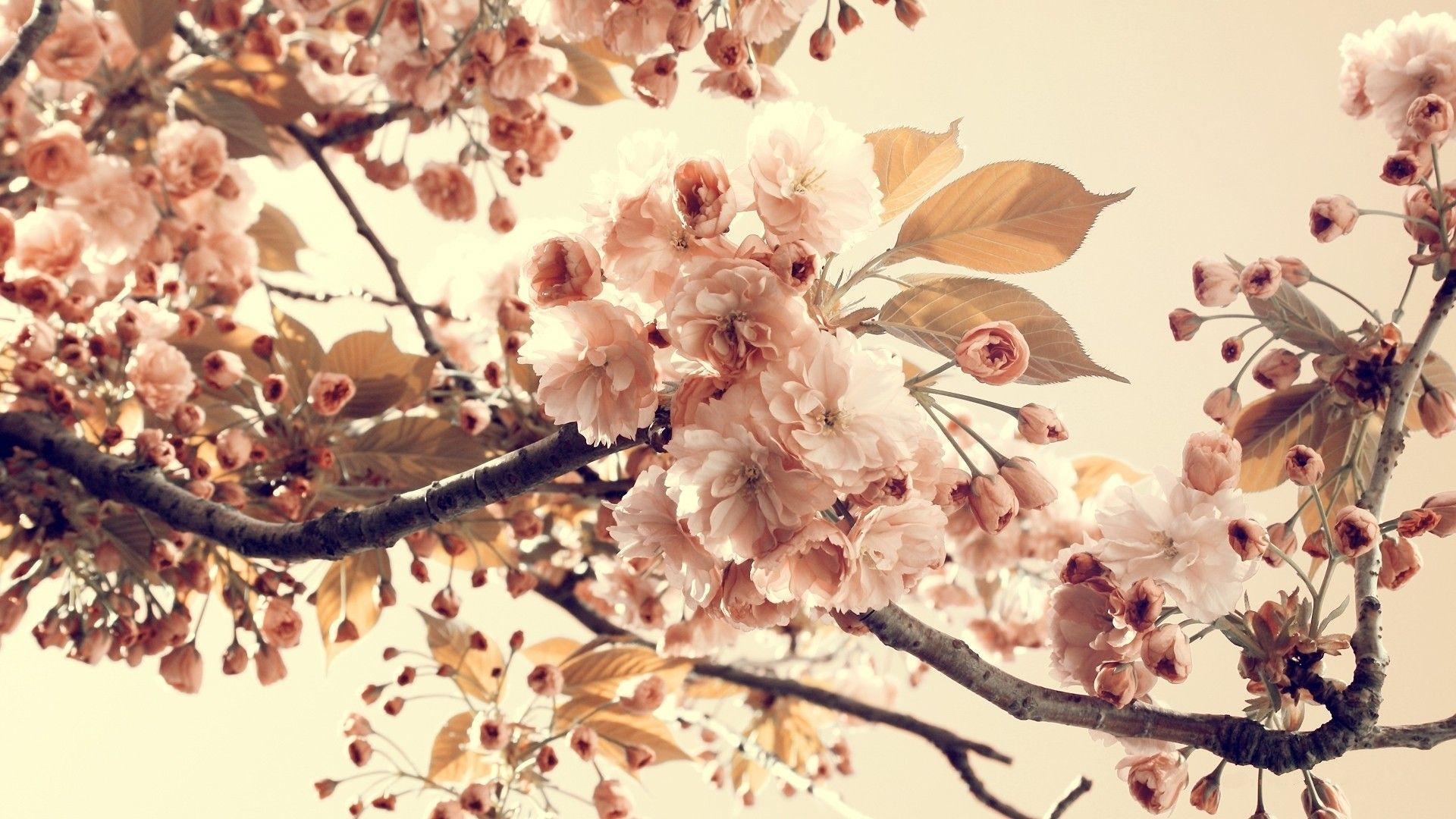 Vintage Flowers Photography Wallpapers Top Free Vintage Flowers Photography Backgrounds Wallpaperaccess