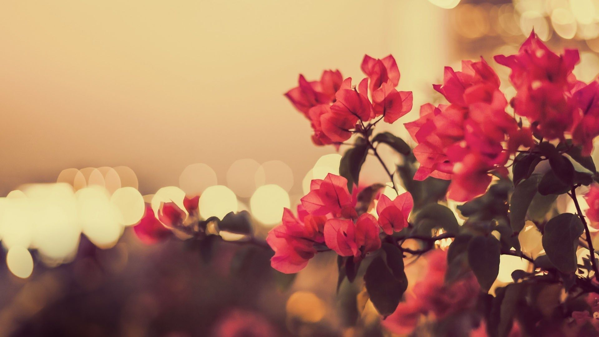 Vintage Flowers Photography Wallpapers Top Free Vintage Flowers
