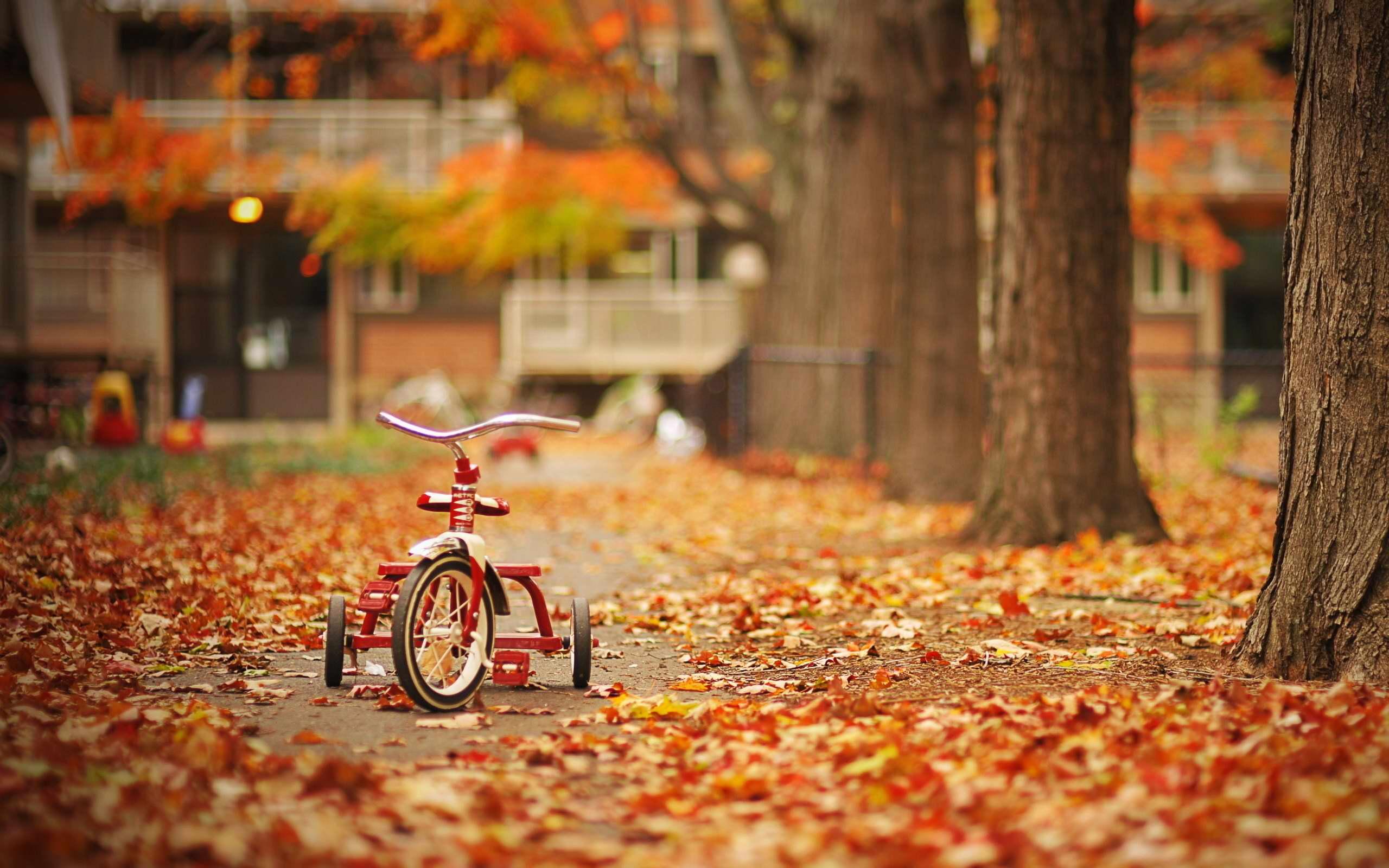 November Fall Wallpapers Top Free November Fall