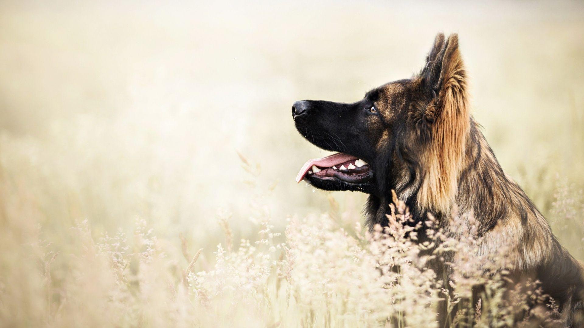 Cool Dog Desktop Wallpapers Top Free Cool Dog Desktop Backgrounds Wallpaperaccess