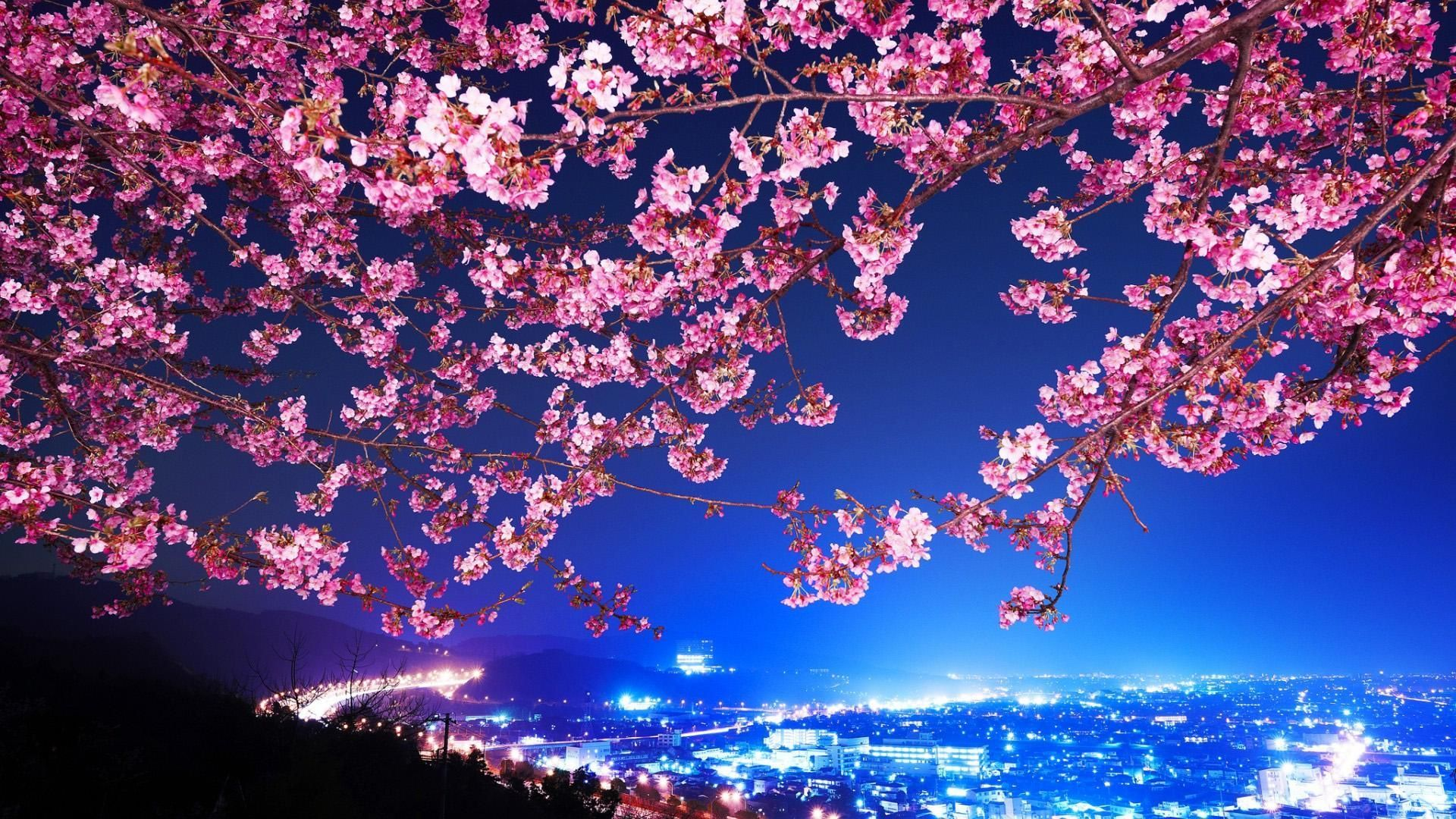 Cute 3d Japanese Wallpapers Top Free Cute 3d Japanese