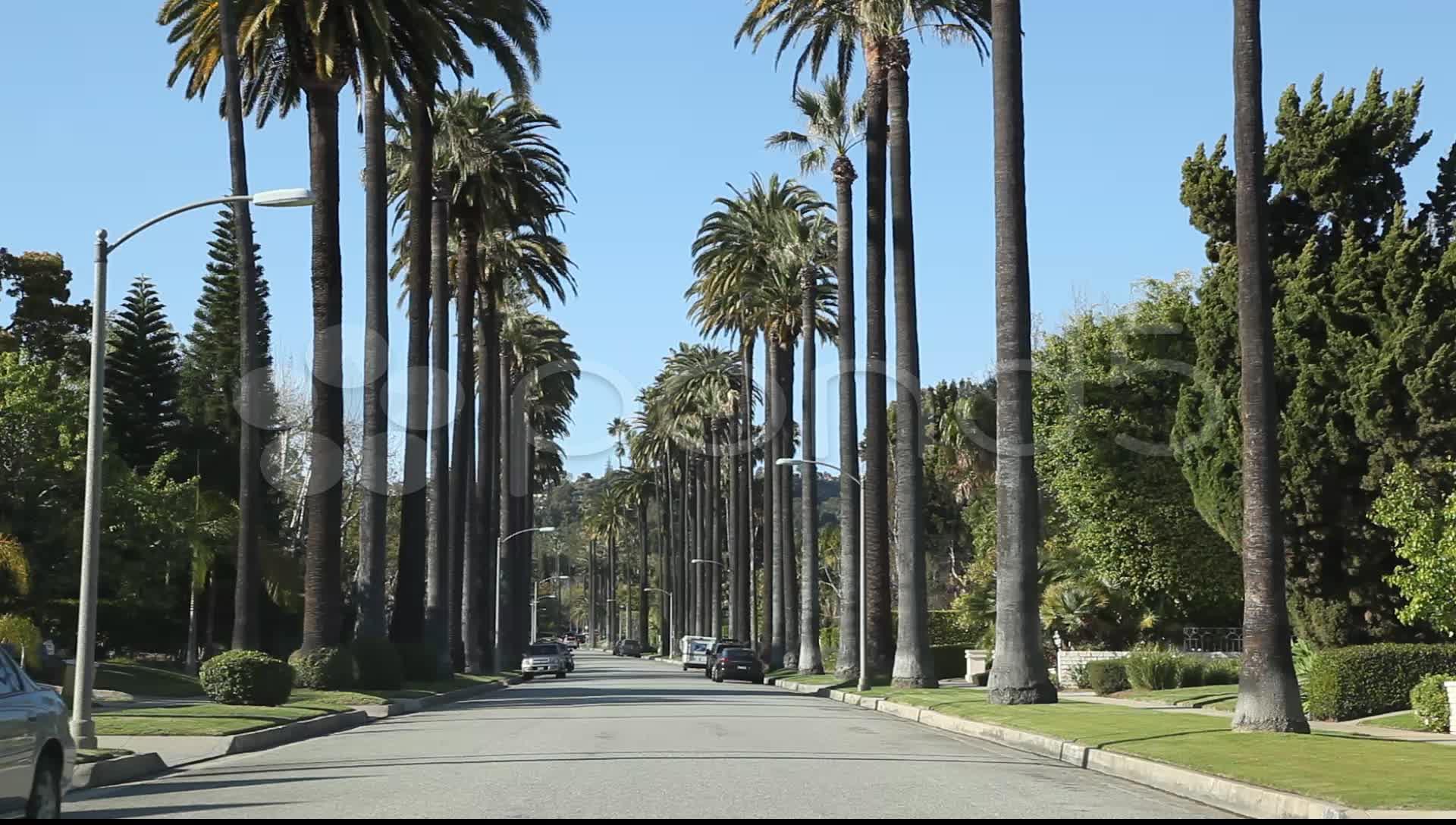 California Palm Trees Wallpapers - Top Free California ...