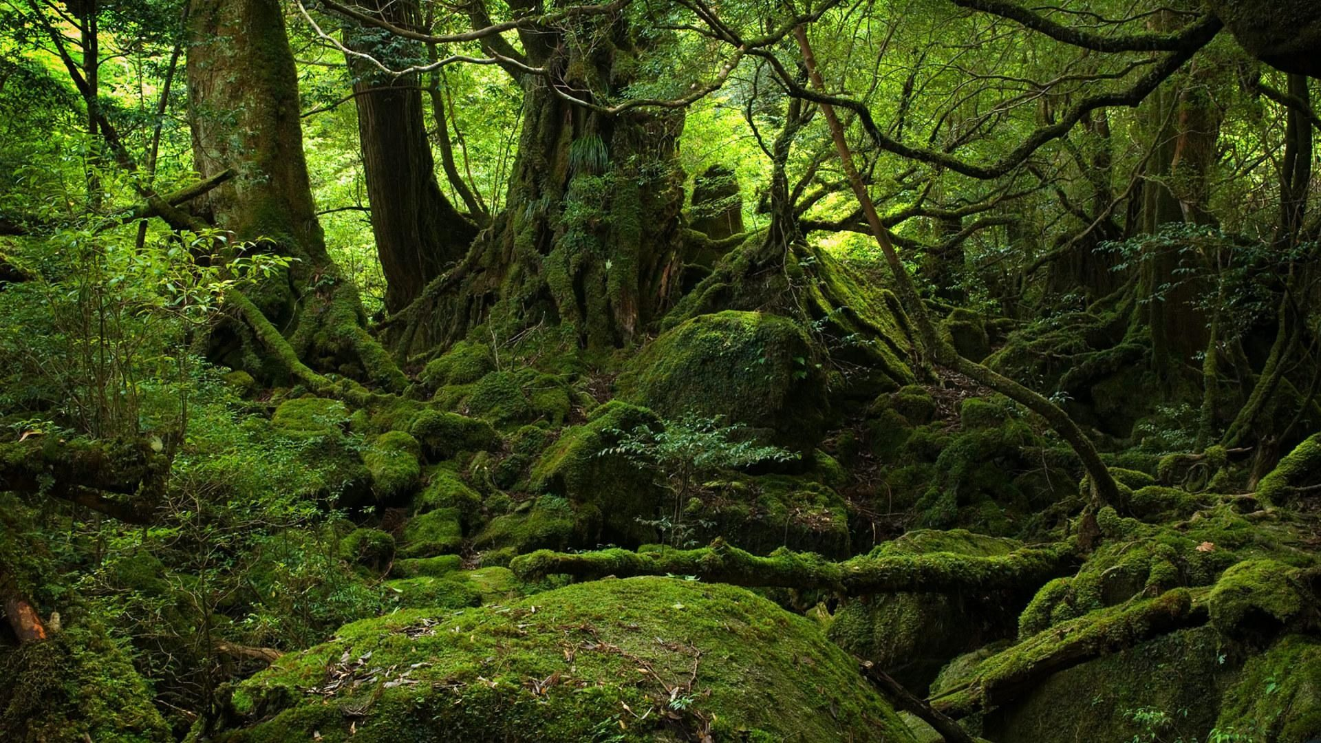 Old Forest Wallpapers Top Free Old Forest Backgrounds Wallpaperaccess