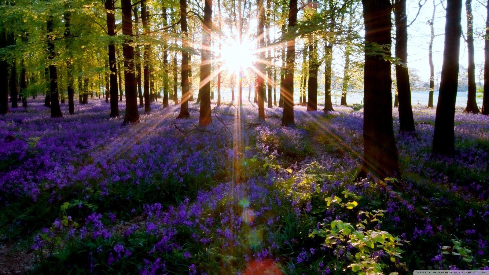 Spring Forest Desktop Wallpapers Top Free Spring Forest