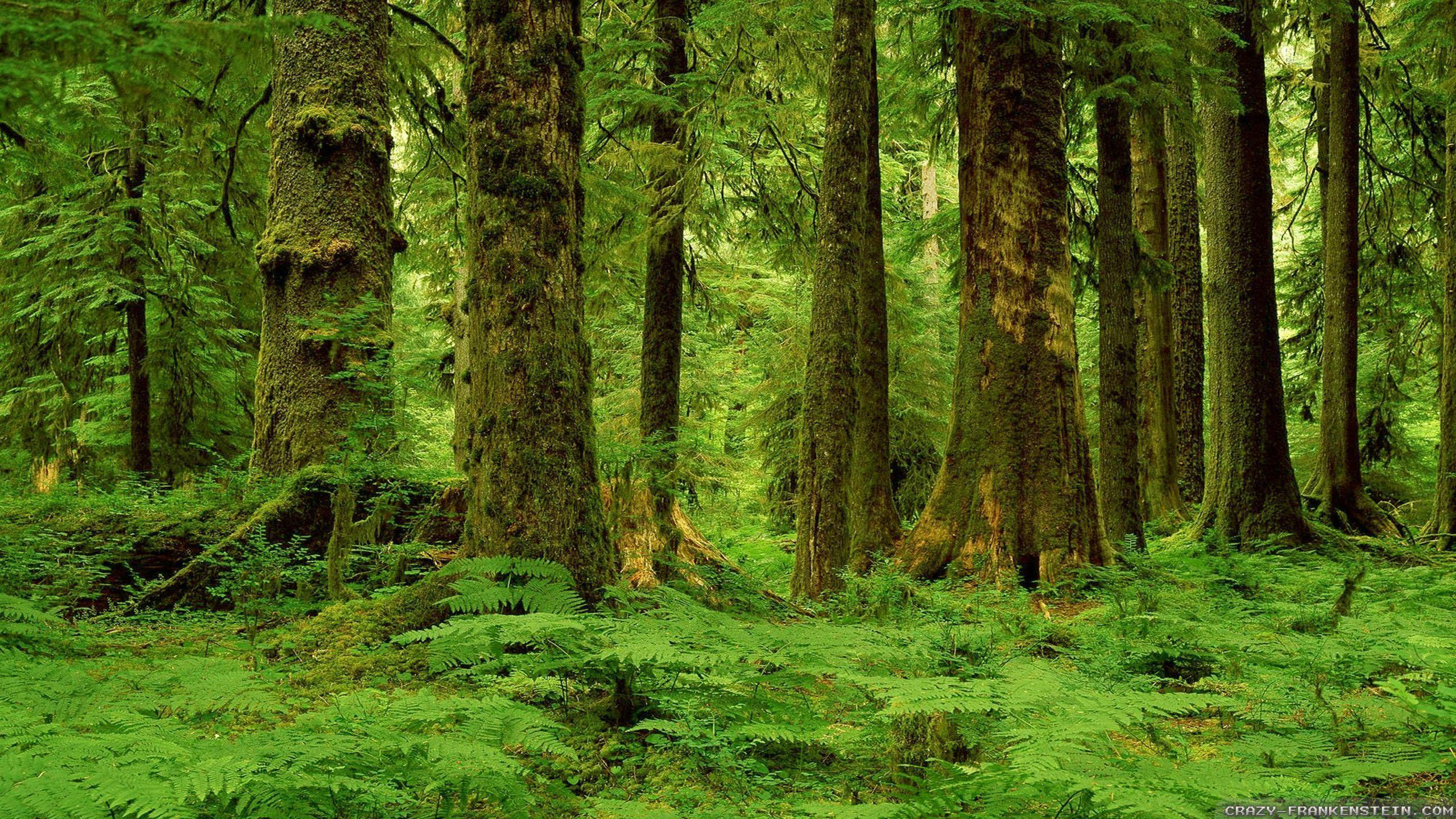 Hình nền rừng HD 2560x1440.  Thiên nhiên.  Hình nền rừng