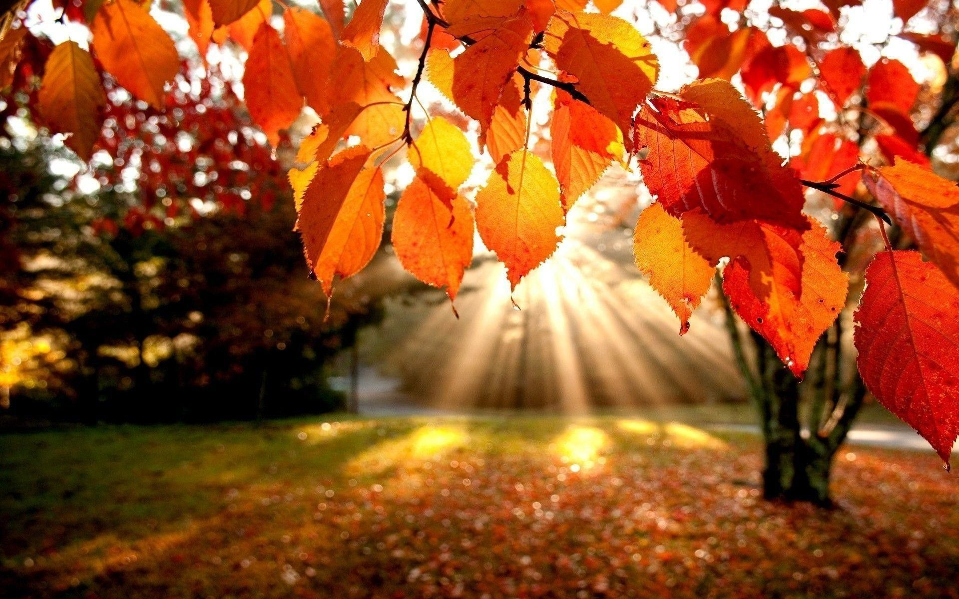 Fall Laptop Wallpapers - Top Free Fall