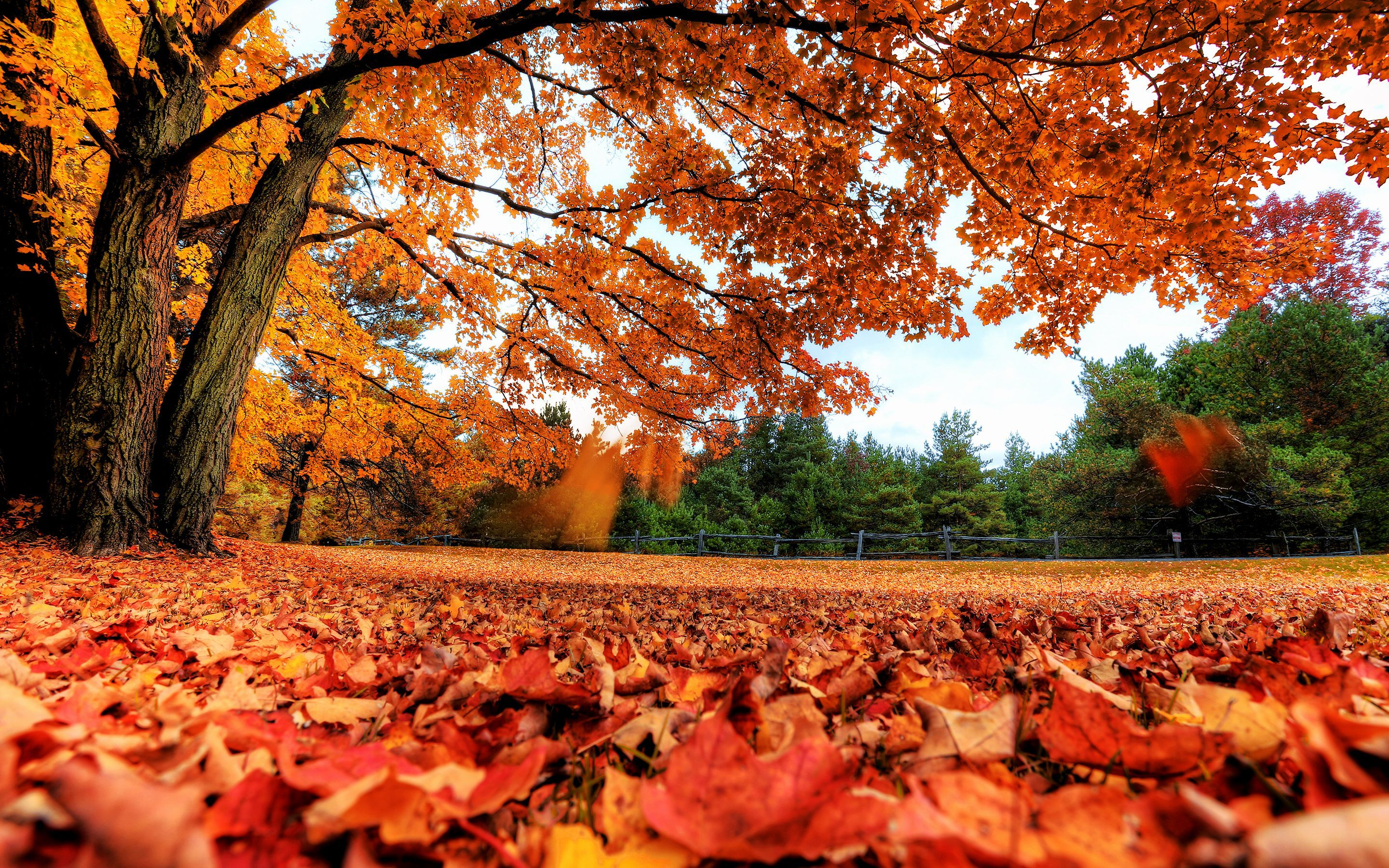 Fall Laptop Wallpapers Top Free Fall Laptop Backgrounds Wallpaperaccess