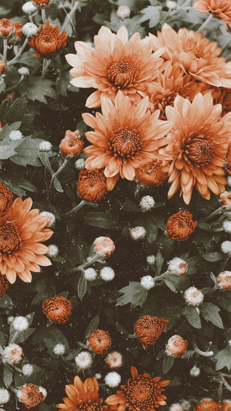 Aesthetic Flowers Iphone Wallpapers Top Free Aesthetic Flowers Iphone Backgrounds Wallpaperaccess