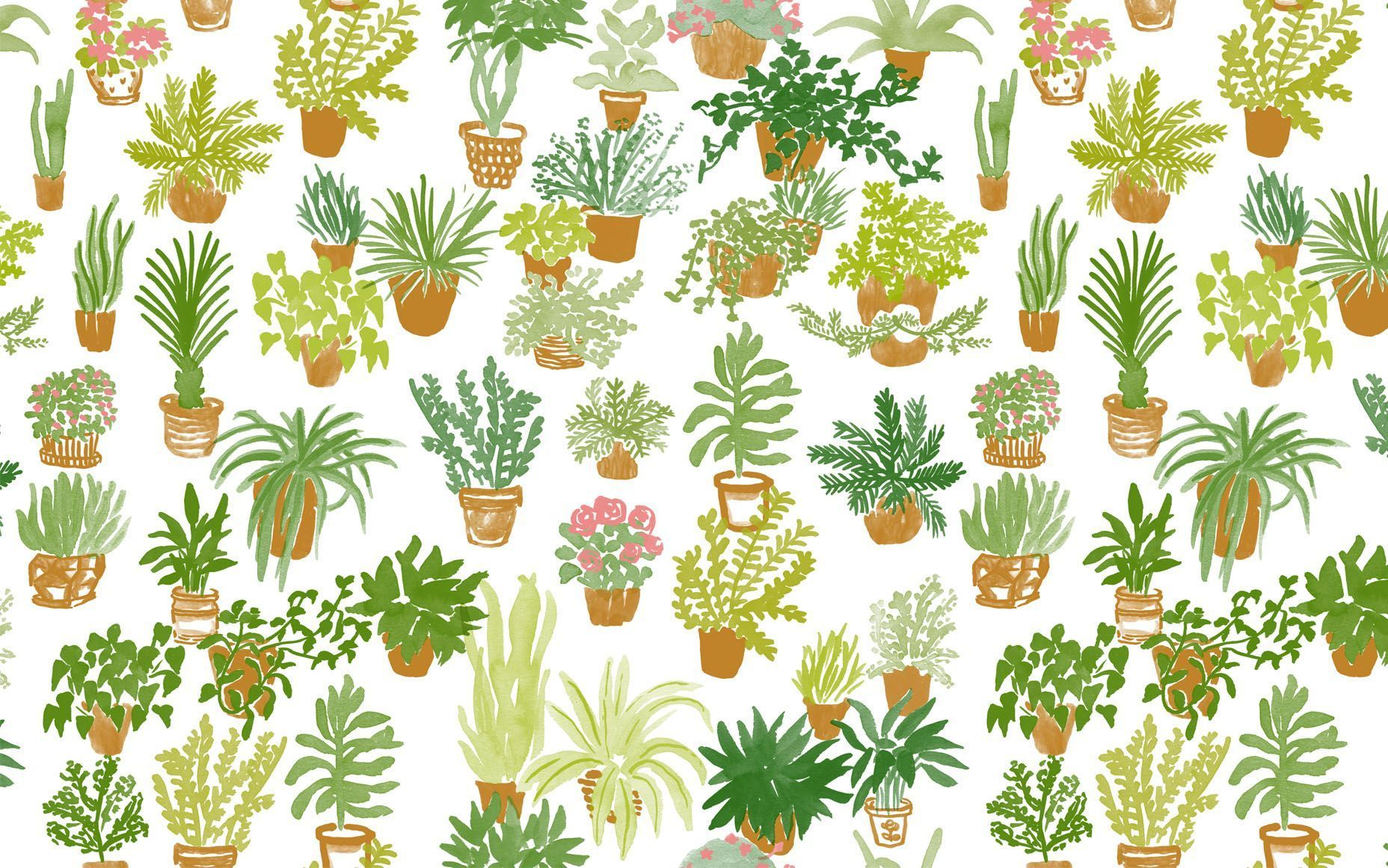 aesthetic plants wallpapers