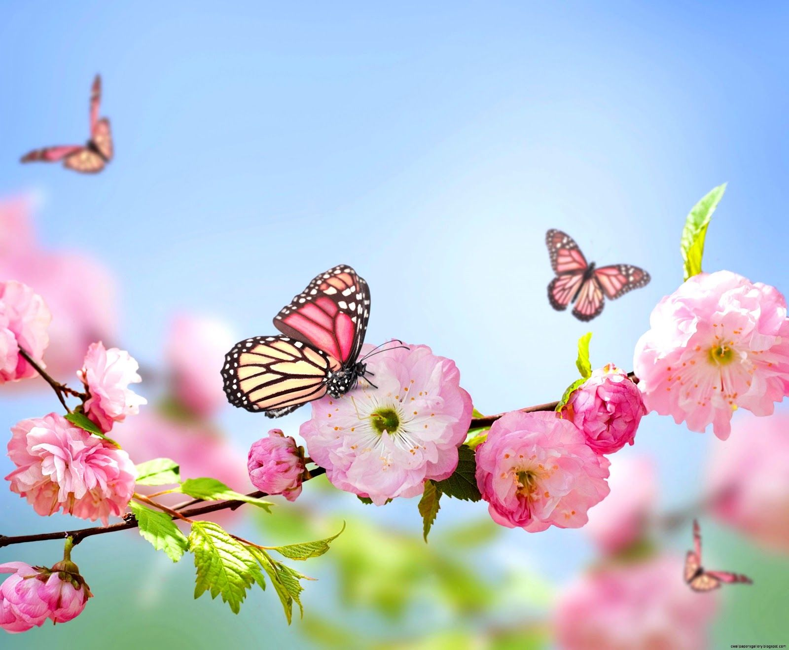 Flowers And Butterflies Wallpapers Top Free Flowers And