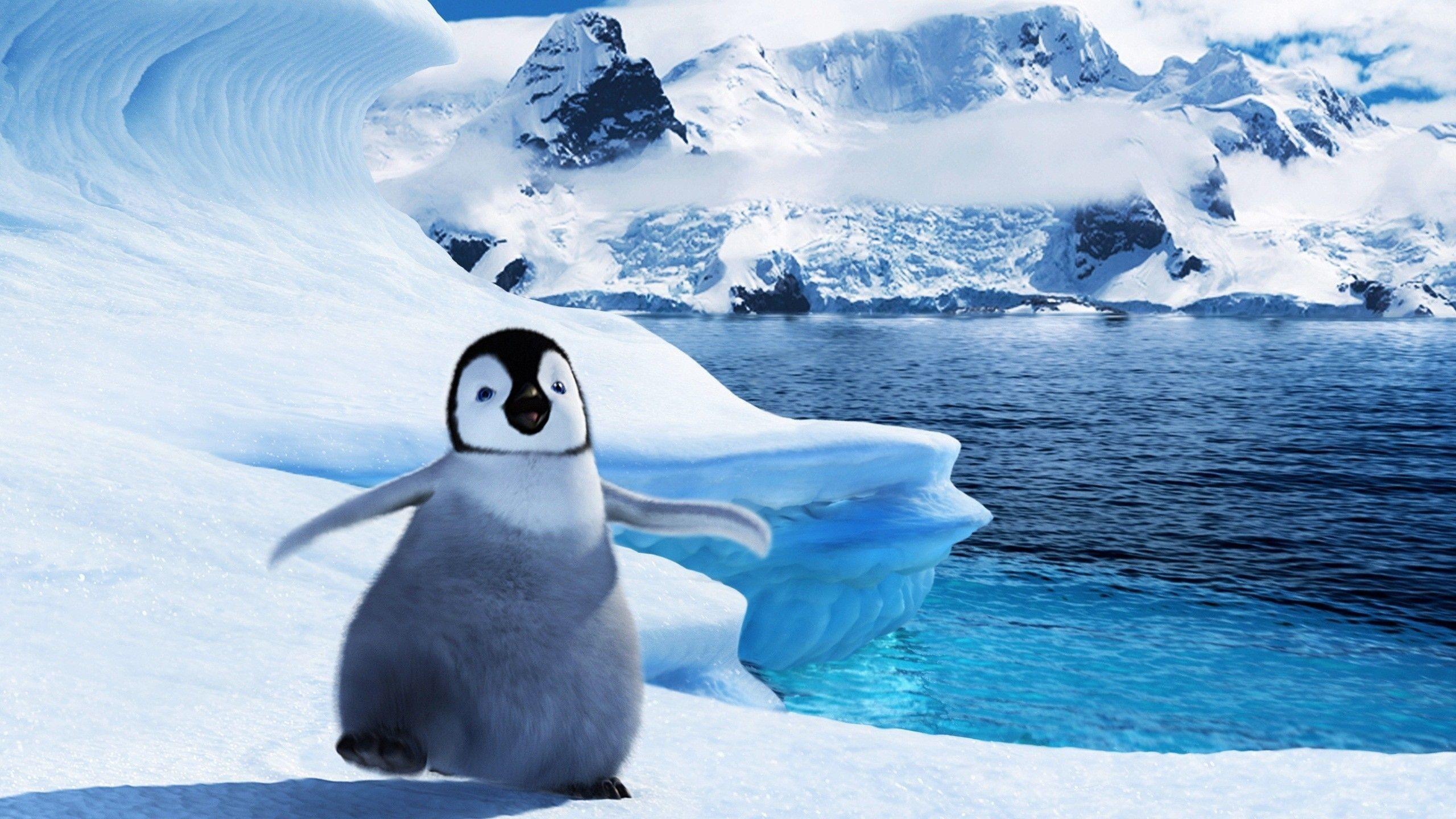 Cute Baby Penguin Wallpapers Top Free Cute Baby Penguin
