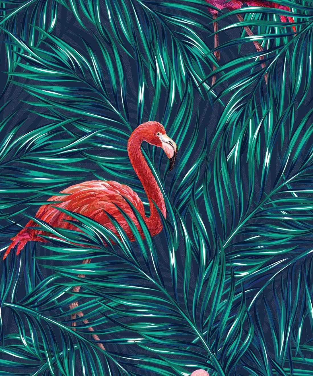 Tropical Flamingo Phone Wallpapers Top Free Tropical Flamingo