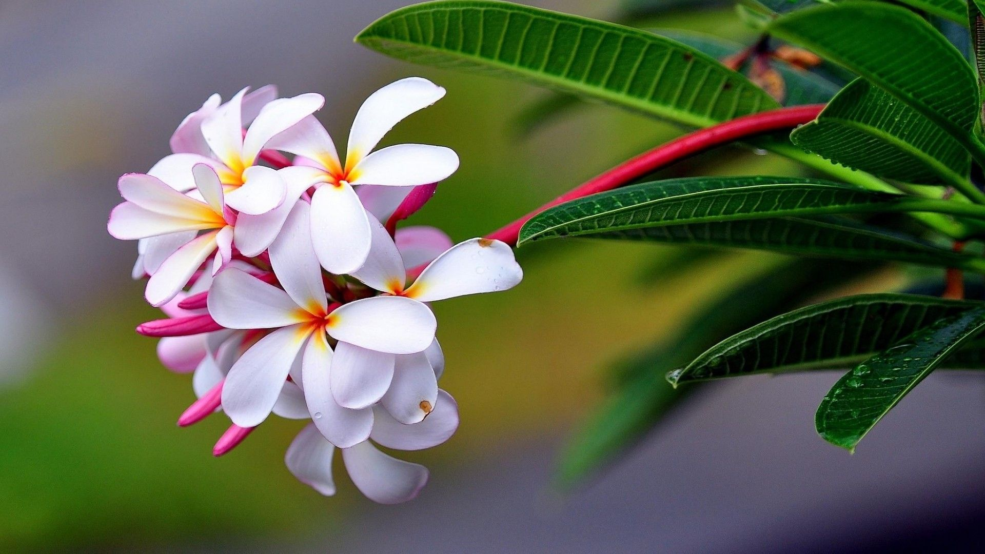 Tropical Flowers Wallpapers - Top Free ...