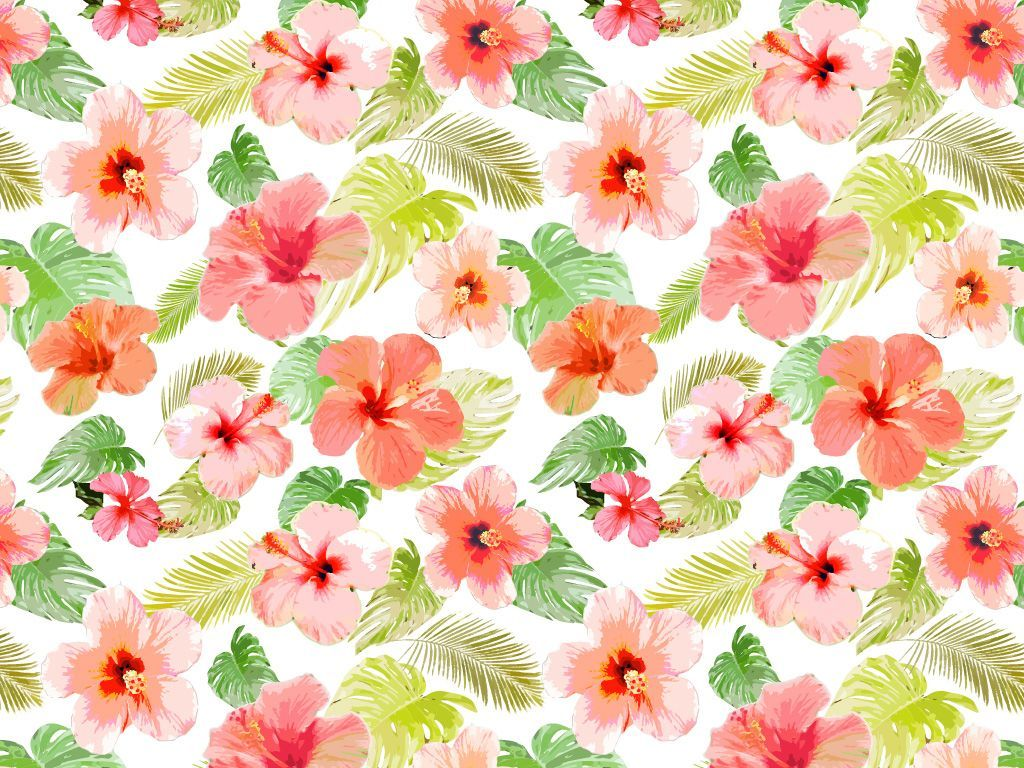Tropical Flowers Wallpapers Top Free Tropical Flowers
