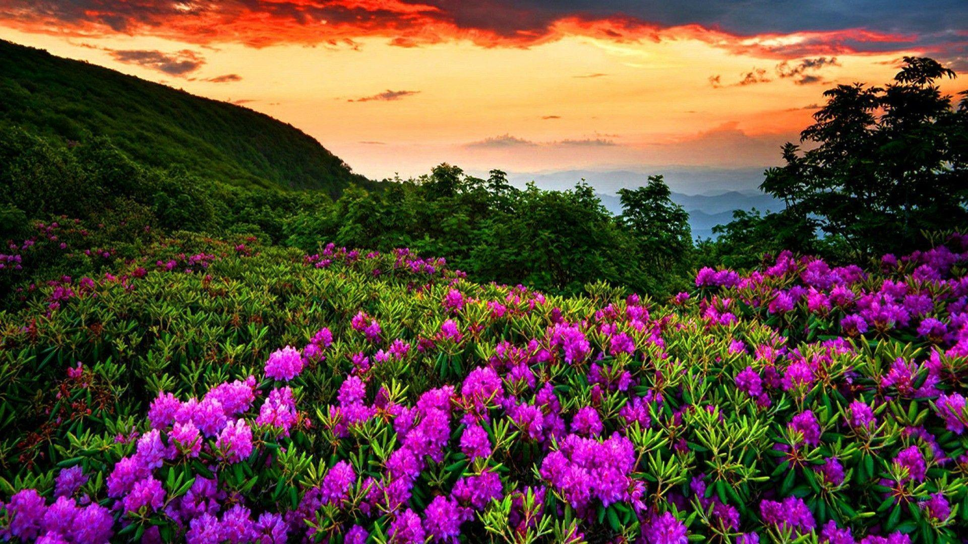 Most Beautiful Spring Wallpapers Top Free Most Beautiful Spring Backgrounds Wallpaperaccess