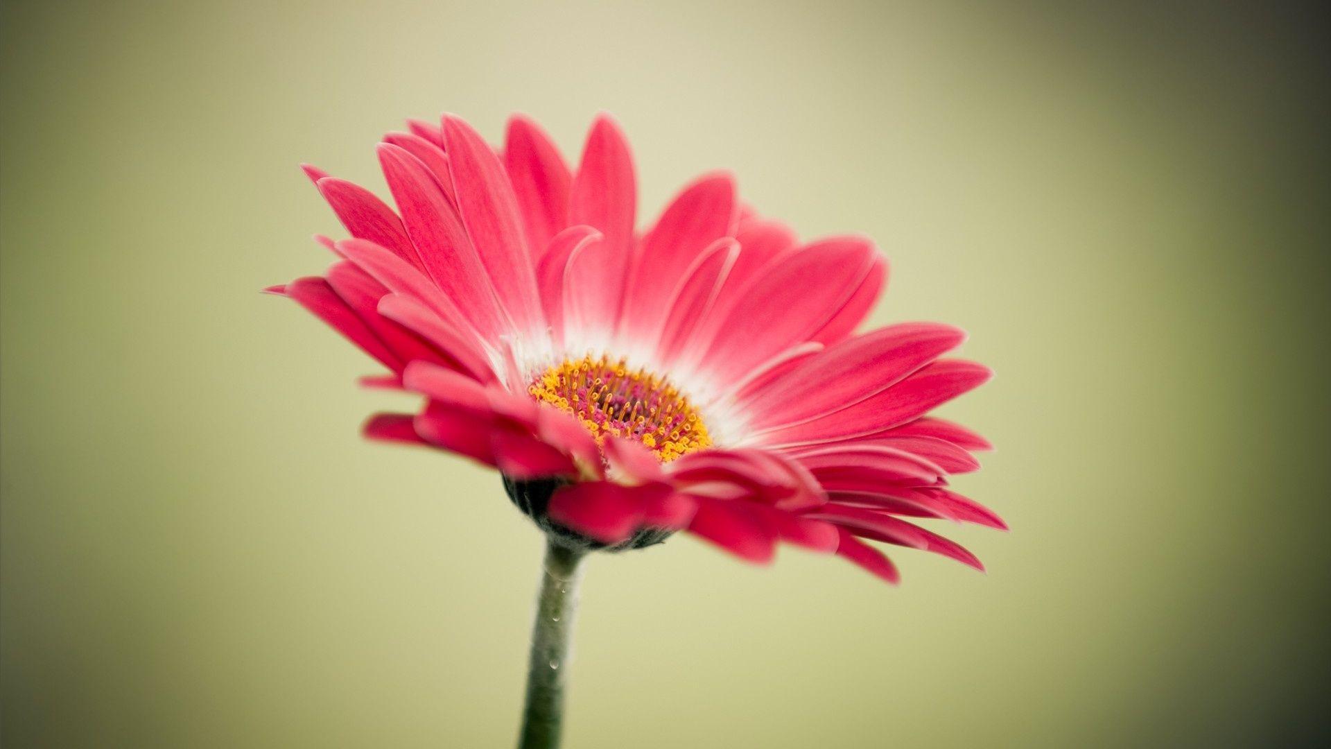 Hình ảnh hoa miễn phí 1920x1080, Tải xuống Clip nghệ thuật miễn phí, Clip nghệ thuật miễn phí trên Thư viện Clipart