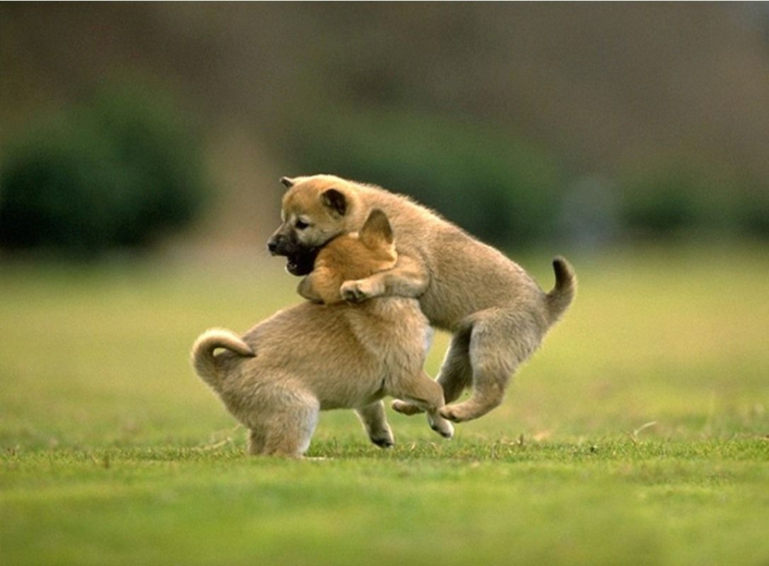 Most Beautiful Animals Wallpapers Top Free Most Beautiful