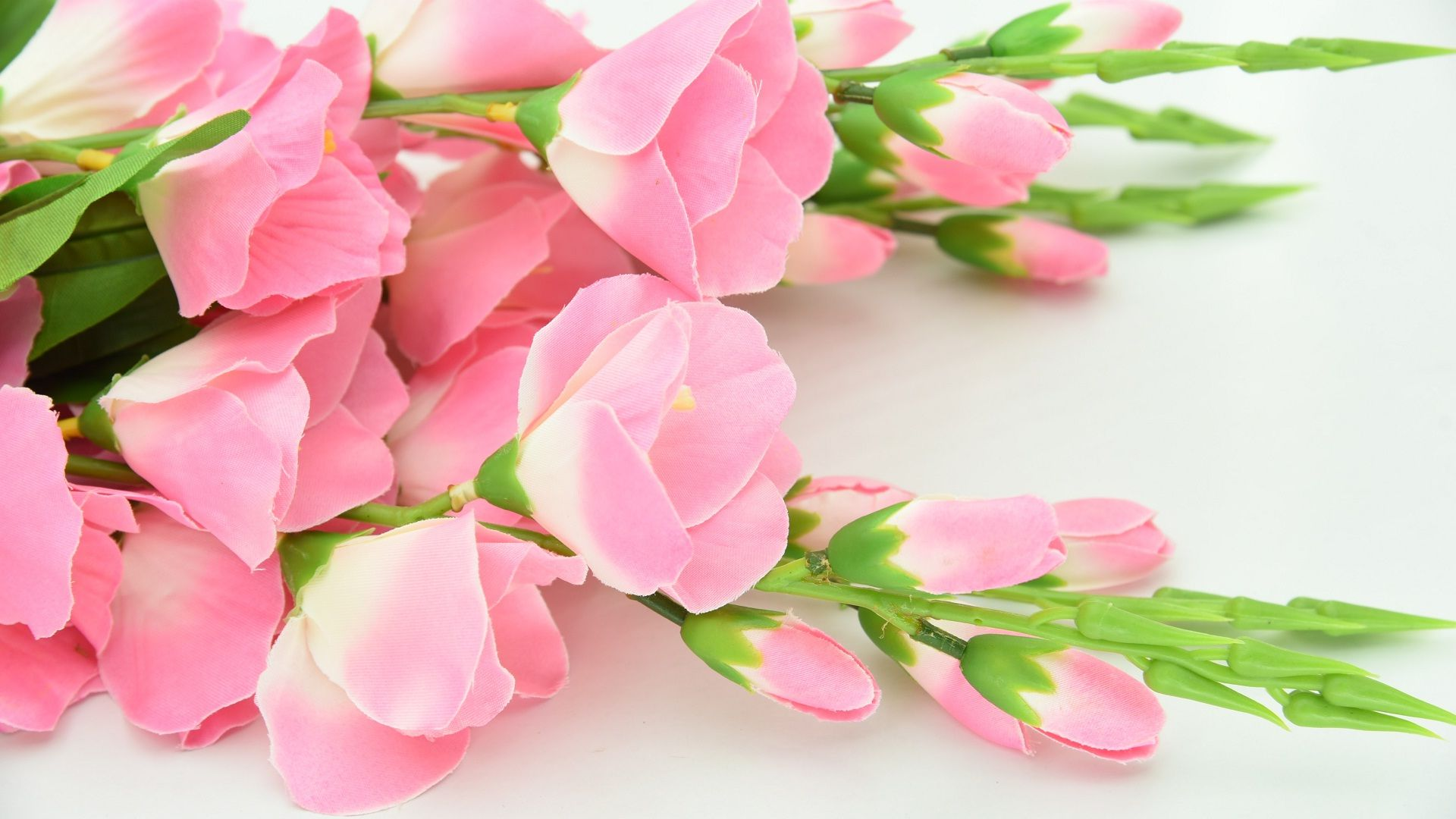 Most Beautiful Pink Flowers Wallpapers