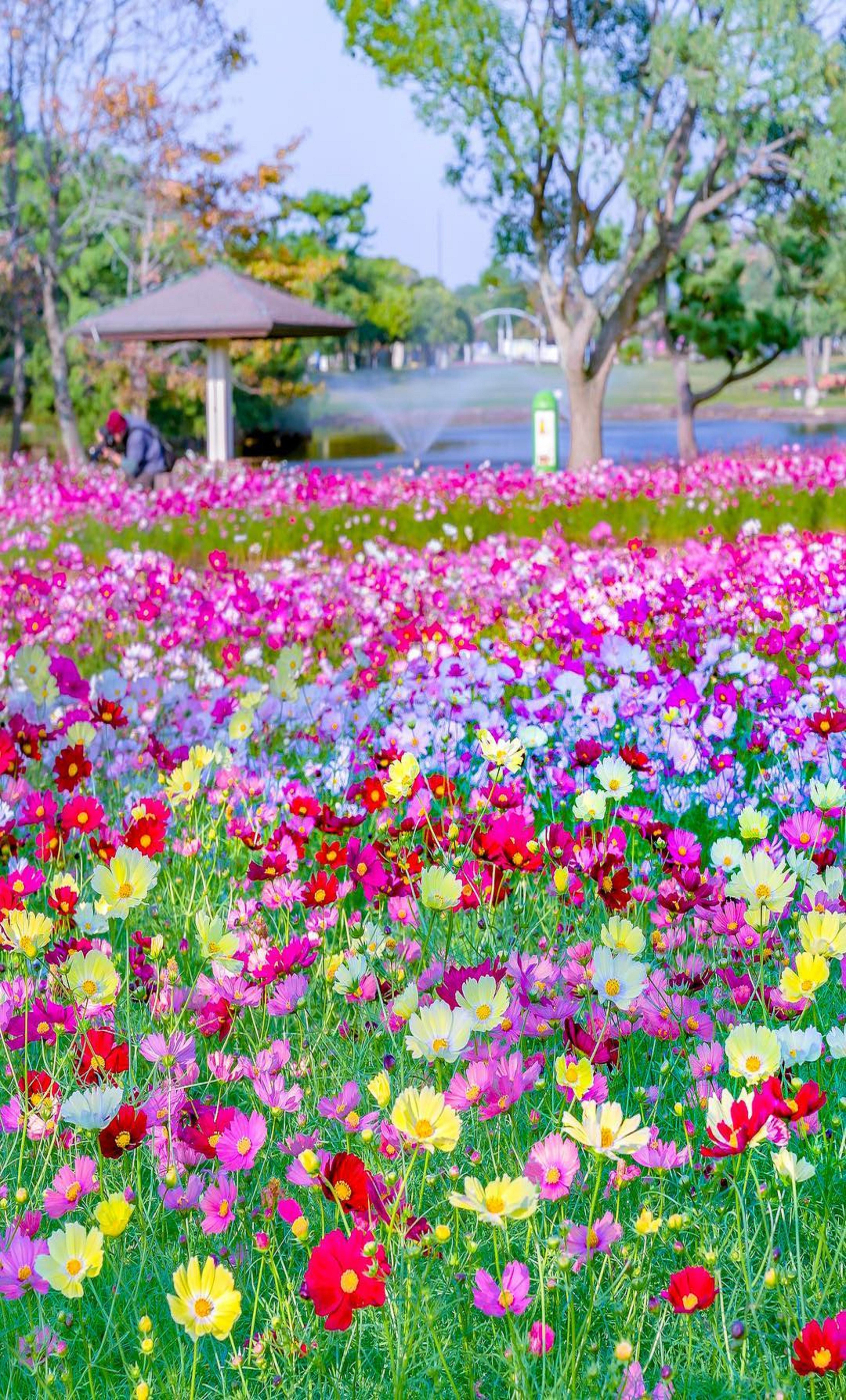 Flower Scenery Wallpapers Top Free Flower Scenery Backgrounds Wallpaperaccess